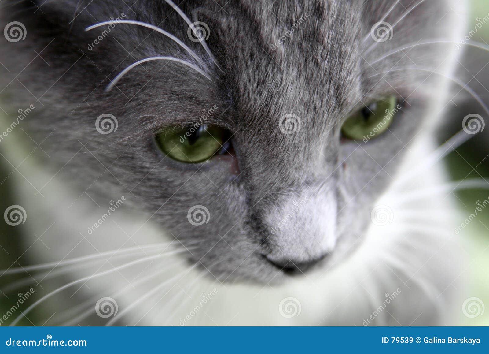 γάτα λυπημένη