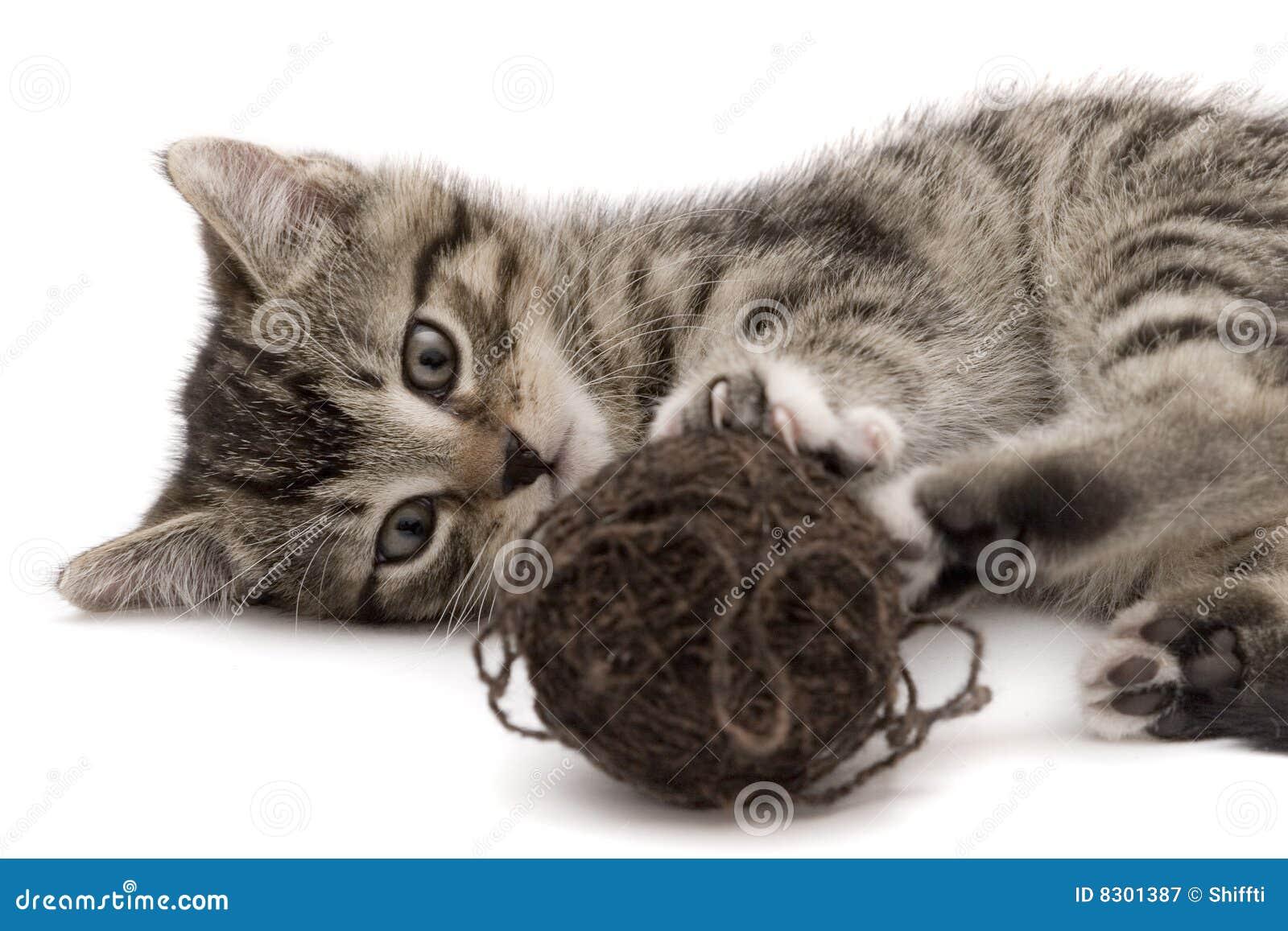 γάτα μικρή