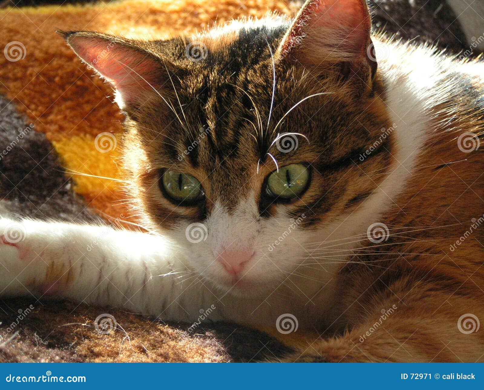 γάτα οκνηρή