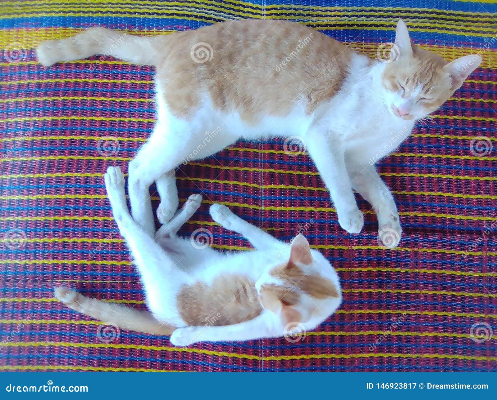 Γάτα πατέρων και ο γιος