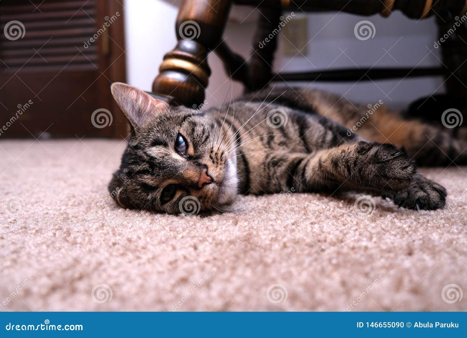 Γάτα που βάζει με το καμμμένο αυτί