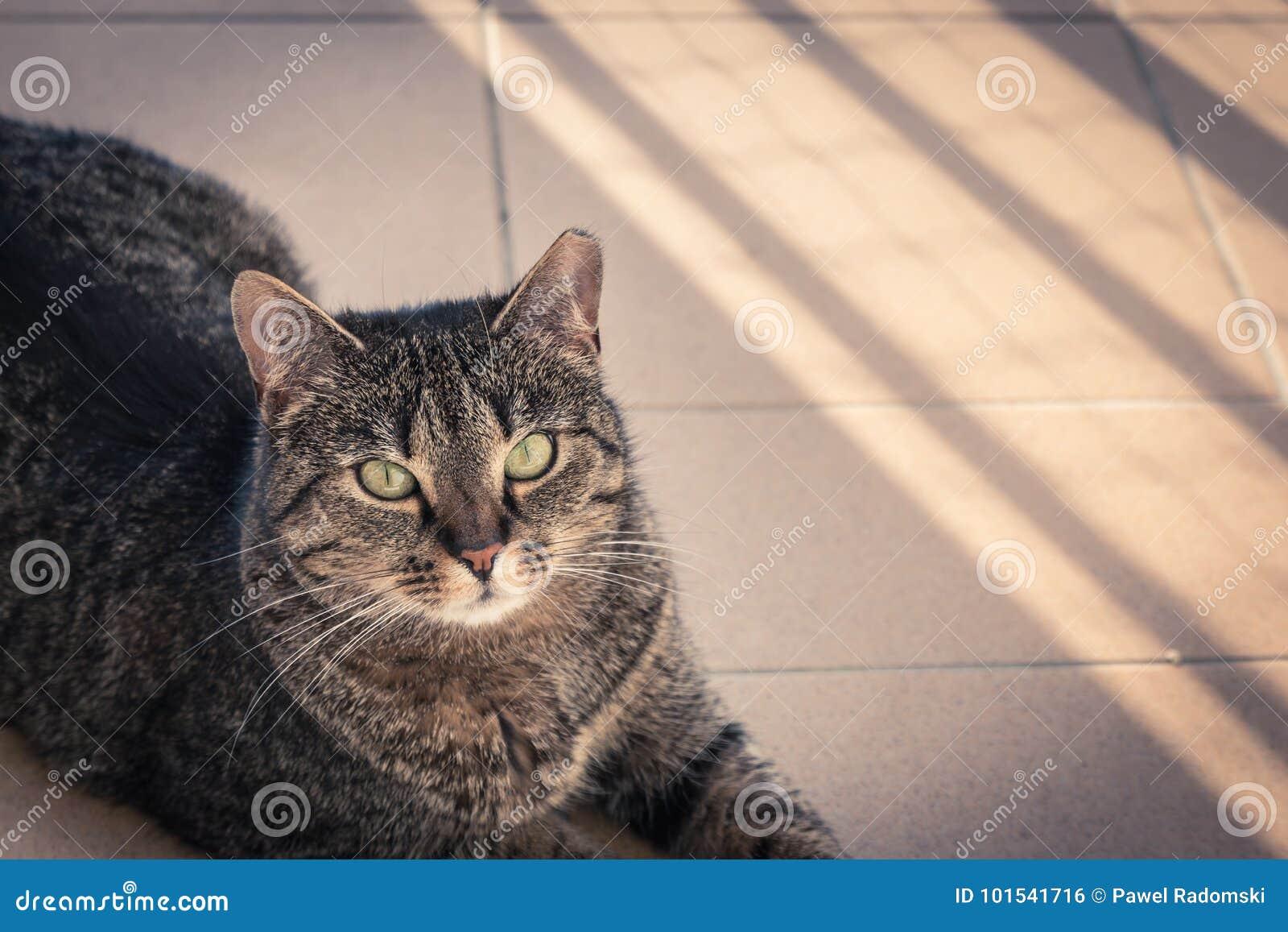 aeafb7fe68c6 Γάτα που βρίσκεται σε ένα μπαλκόνι