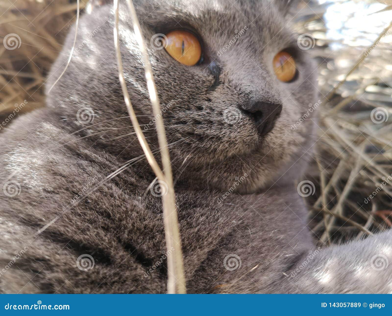 Γάτα που βρίσκεται στο άχυρο