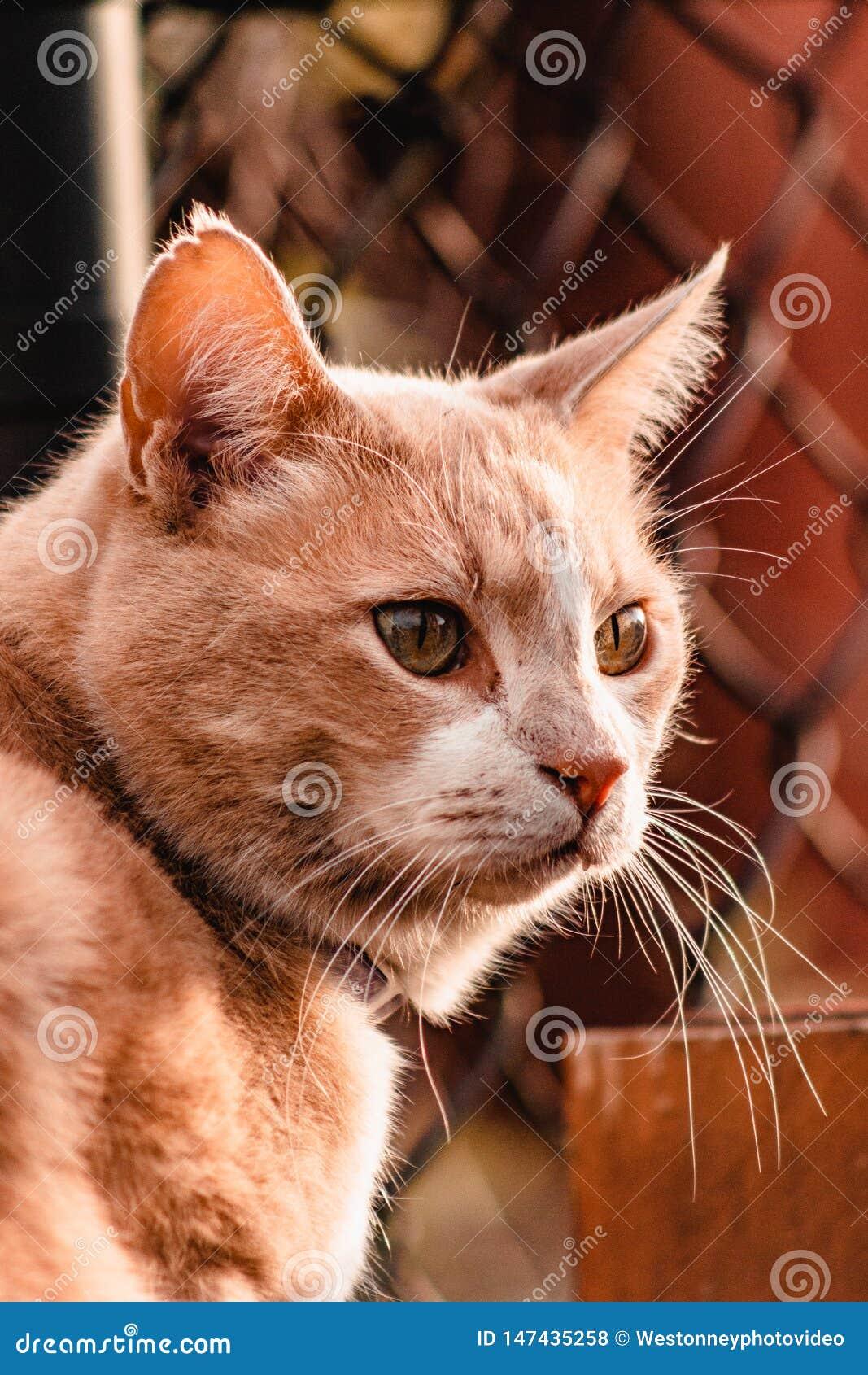 Γάτα που κοιτάζει έξω στο ηλιοβασίλεμα