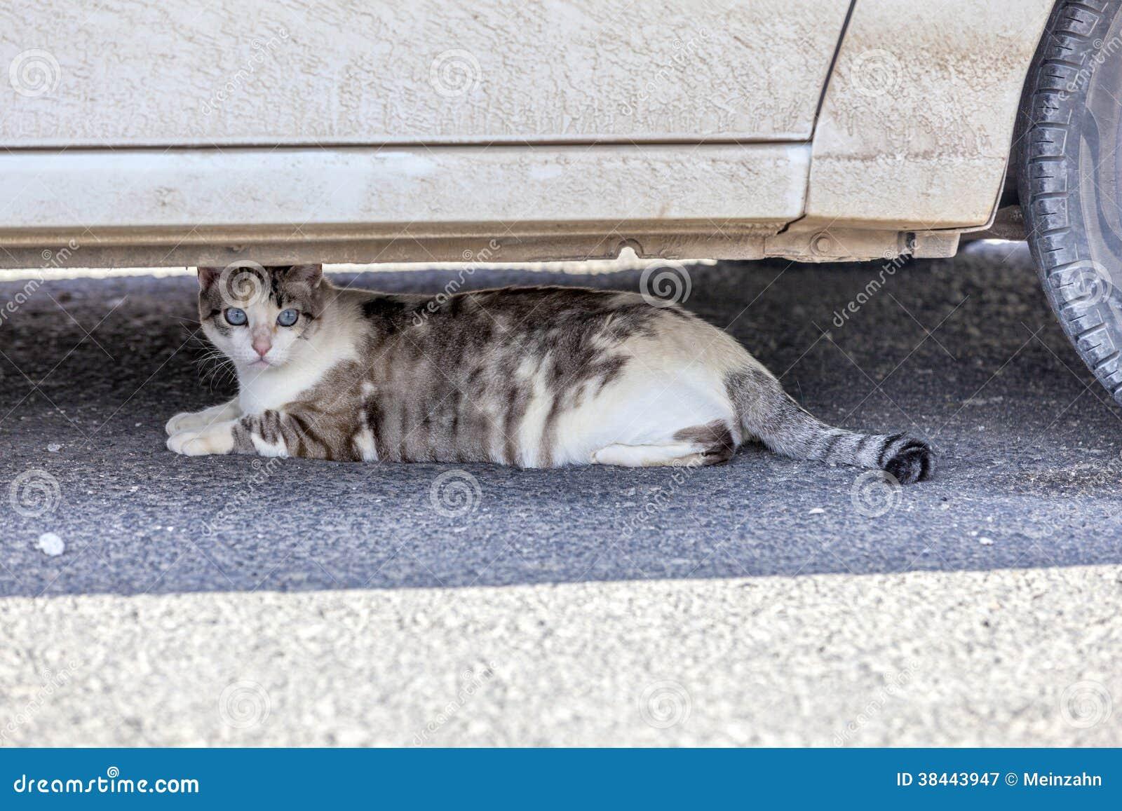 Γάτα που στηρίζεται κάτω από ένα αυτοκίνητο στη θερμότητα