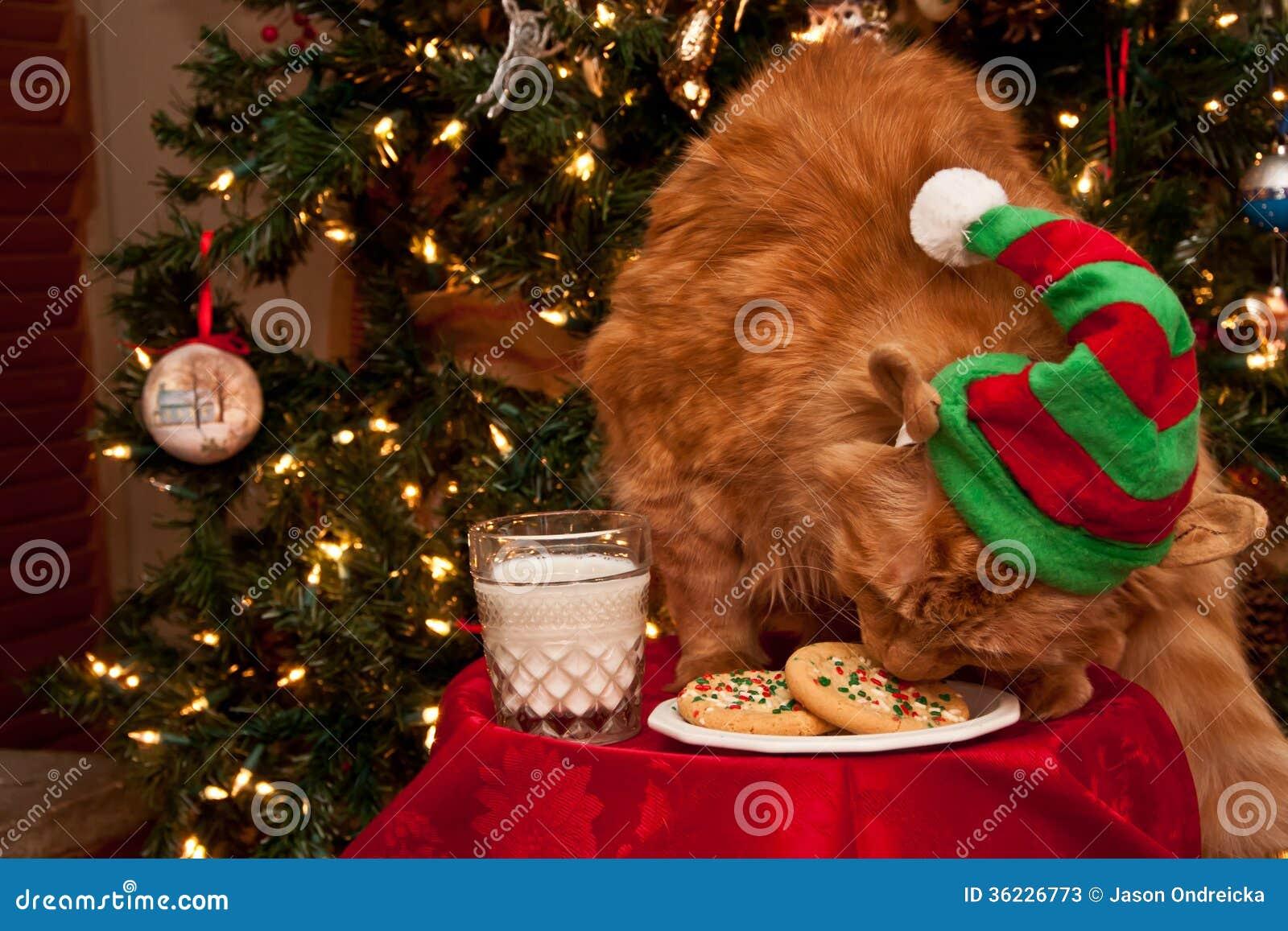 Γάτα που τρώει τα μπισκότα Santas