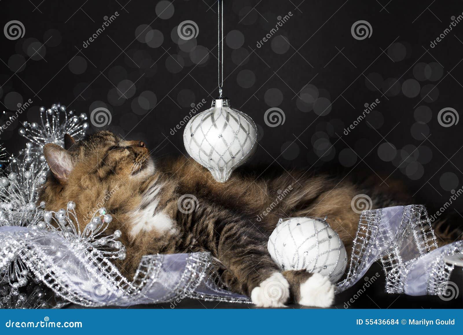 Γάτα που χαμογελά στη διακόσμηση Χριστουγέννων