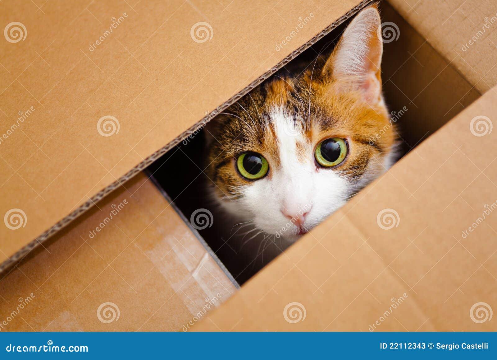 Γάτα σε ένα κιβώτιο