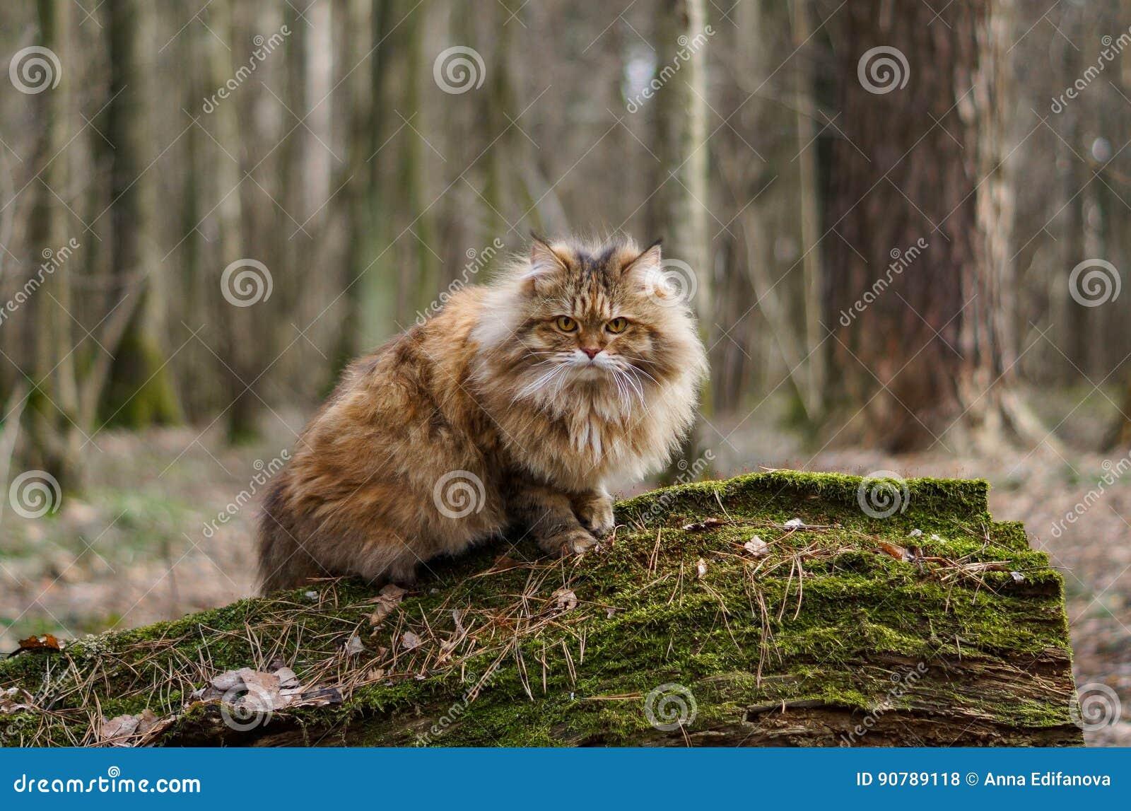 Γάτα στα δάση