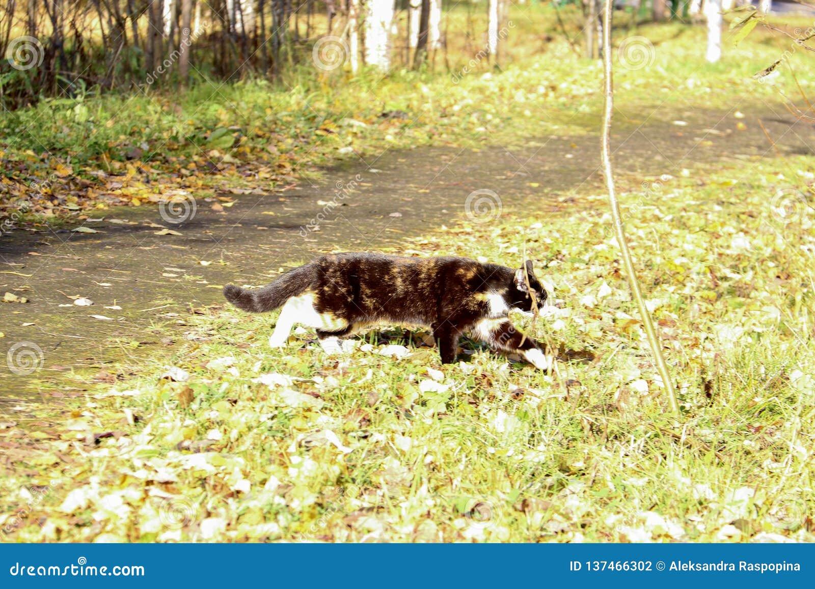 Γάτα στη χλόη Ημέρα φθινοπώρου κοντά στο χωριό Belomorye, περιοχή του Αρχάγγελσκ