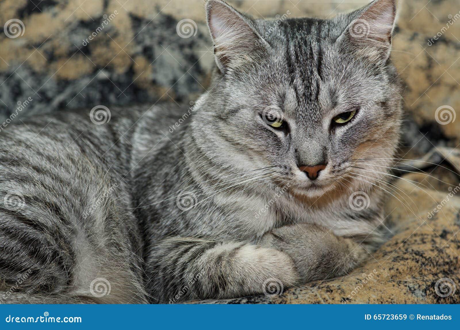 77f7c750d08a Γάτα στο καφετί υπόβαθρο