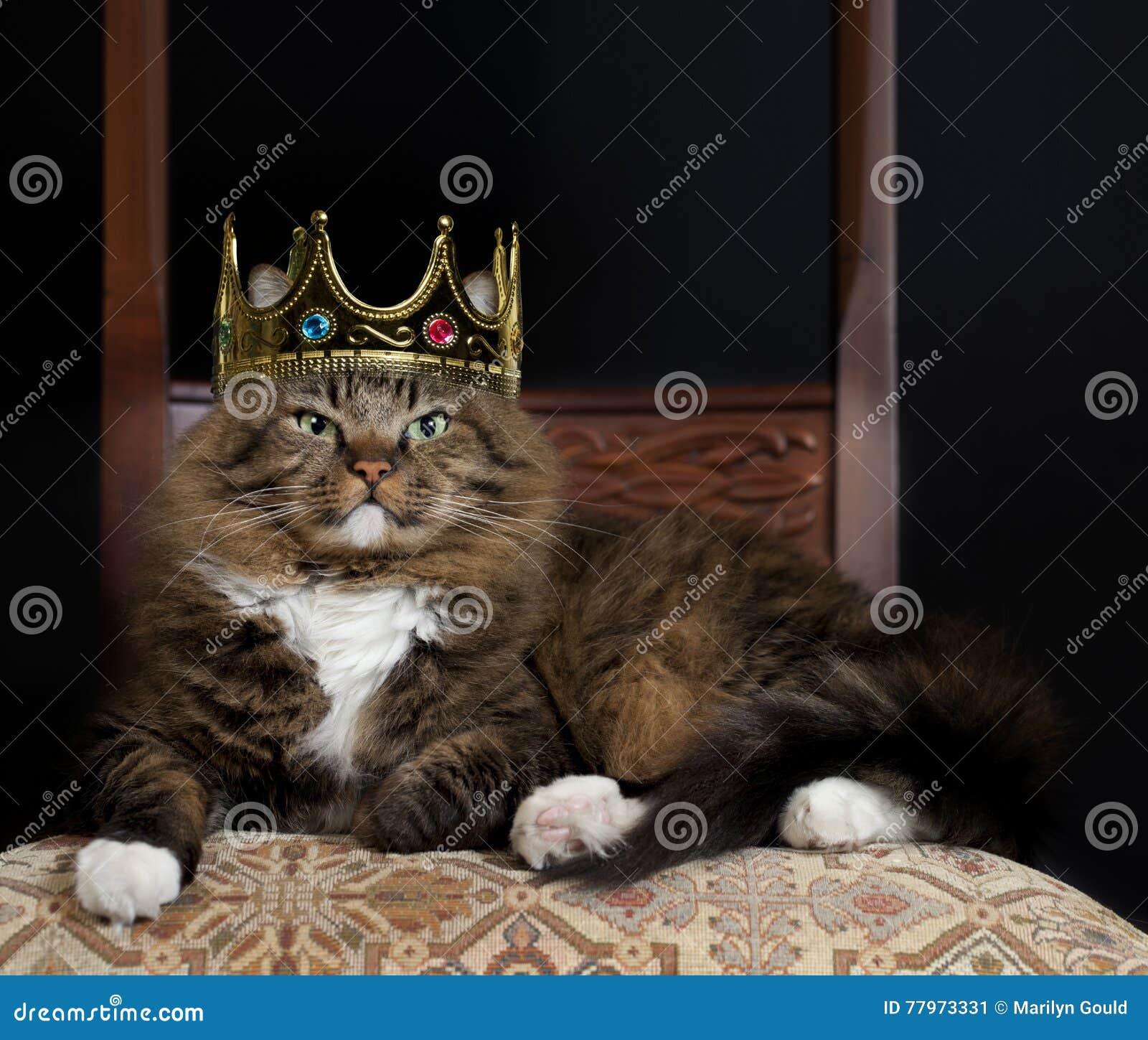 Γάτα ως δικαίωμα