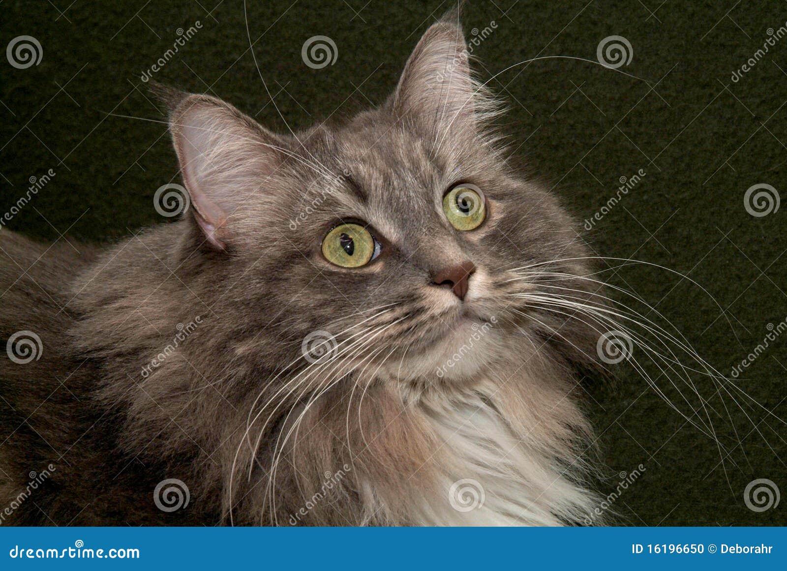 γάτα 001