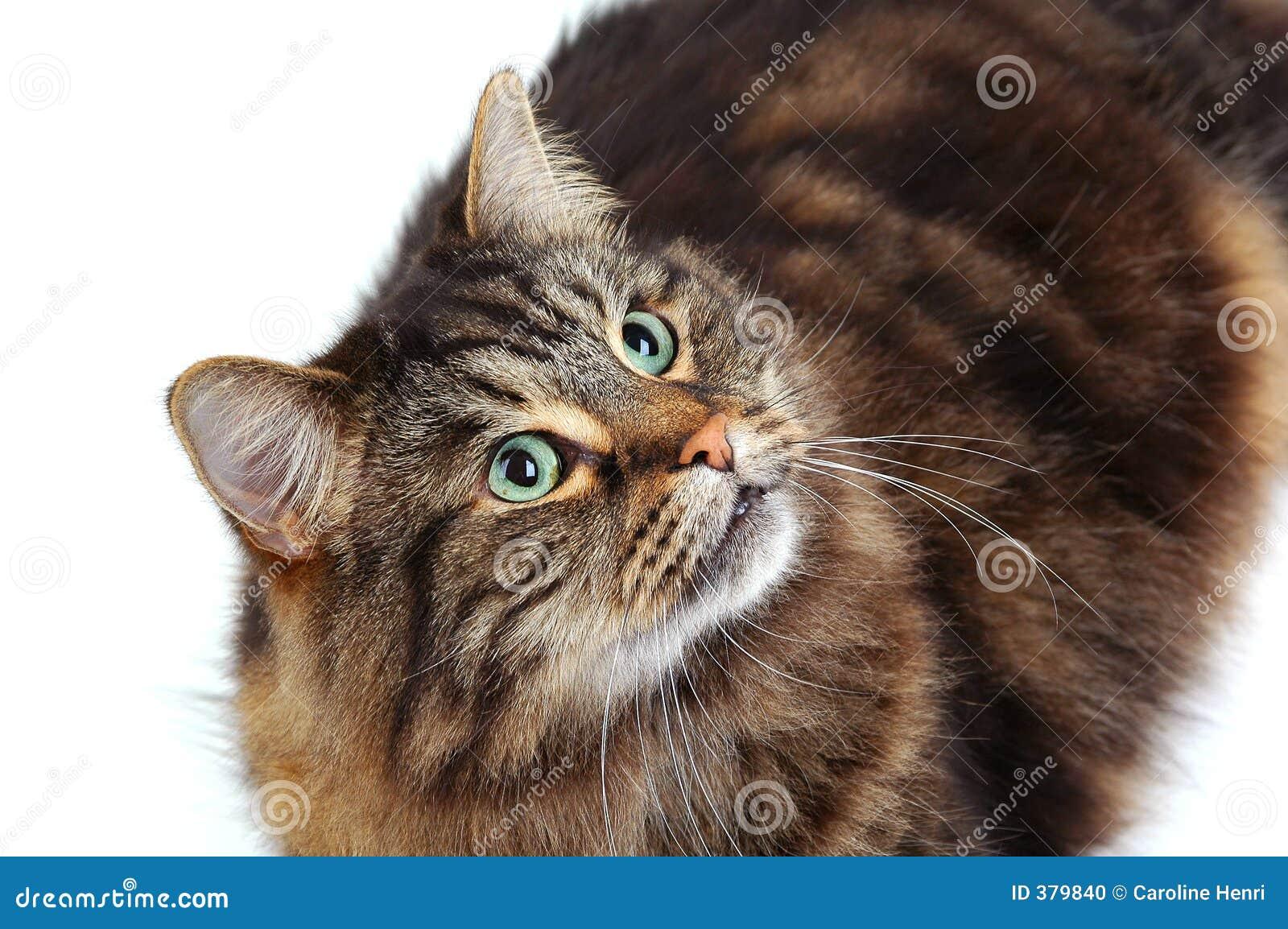 γάτα 2 χαριτωμένη