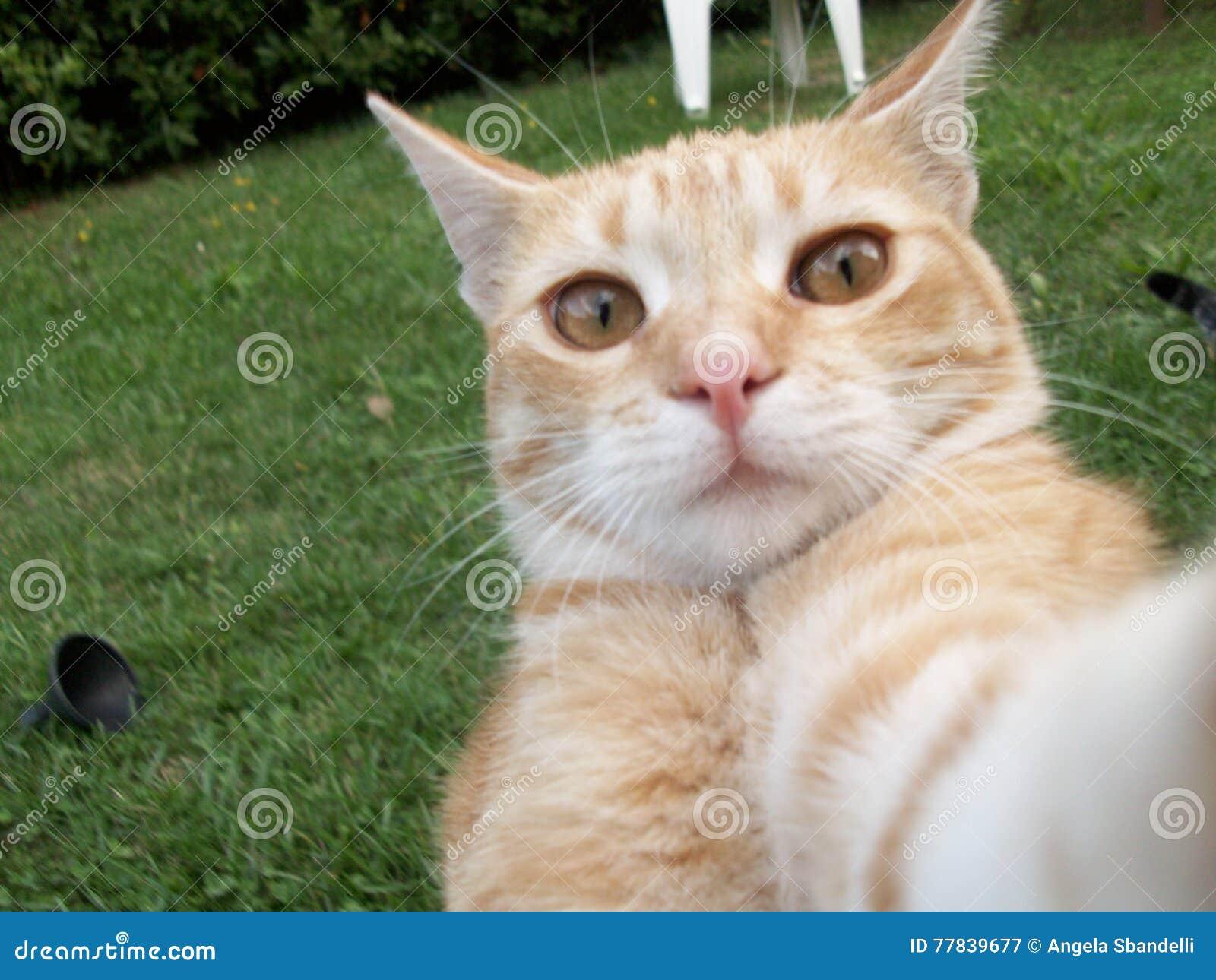 Γάτα selfie