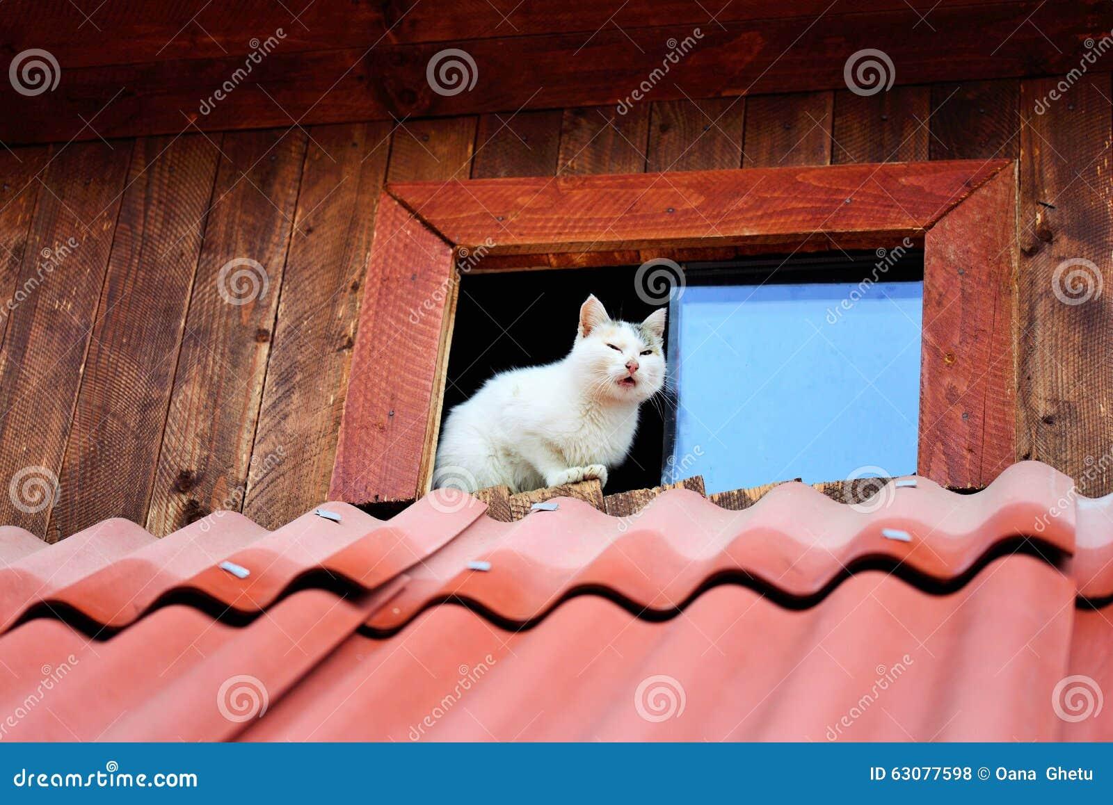 γάτες αστείες