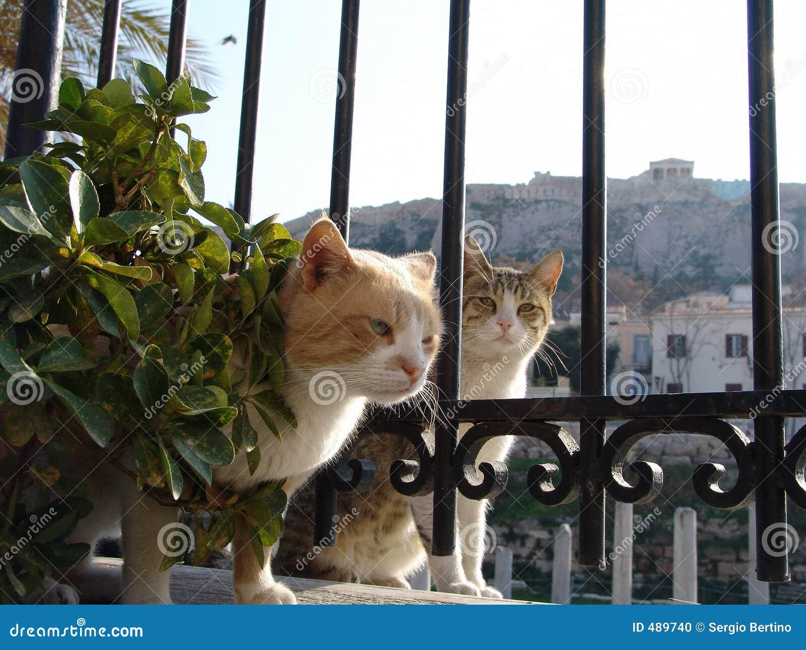 γάτες ελληνικά