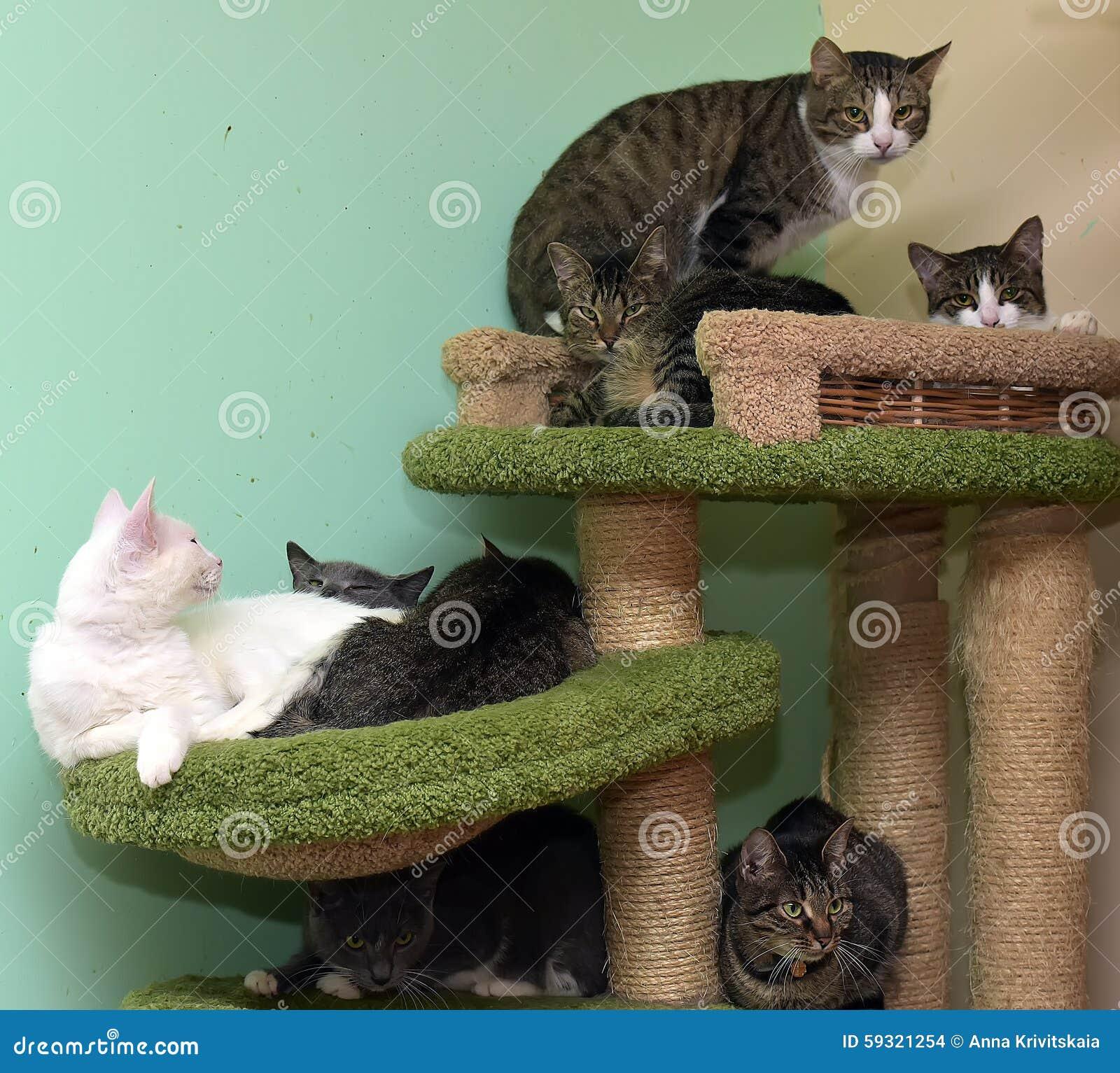 f66cf888e293 Γάτες μαζί στο χαλί στο ζωικό καταφύγιο στην παιδική χαρά για τις γάτες