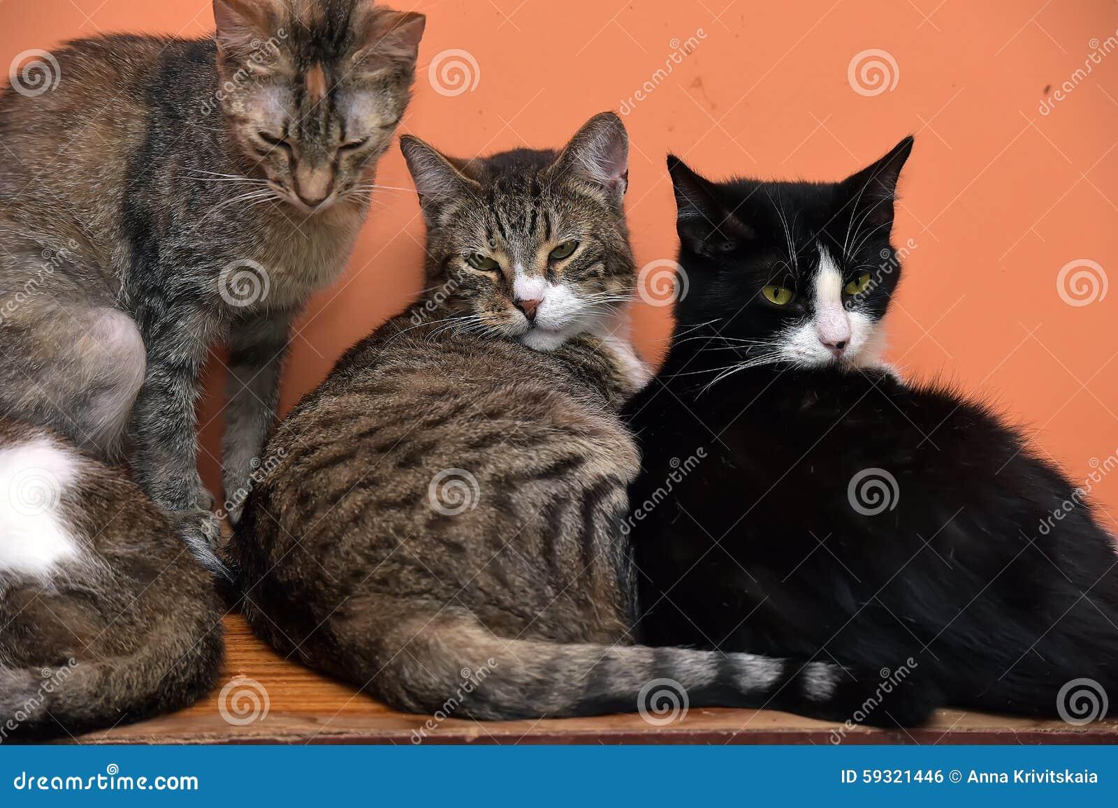 59344a41e64e Γάτες μαζί στο χαλί στο ζωικό καταφύγιο Στοκ Εικόνες - εικόνα από ...