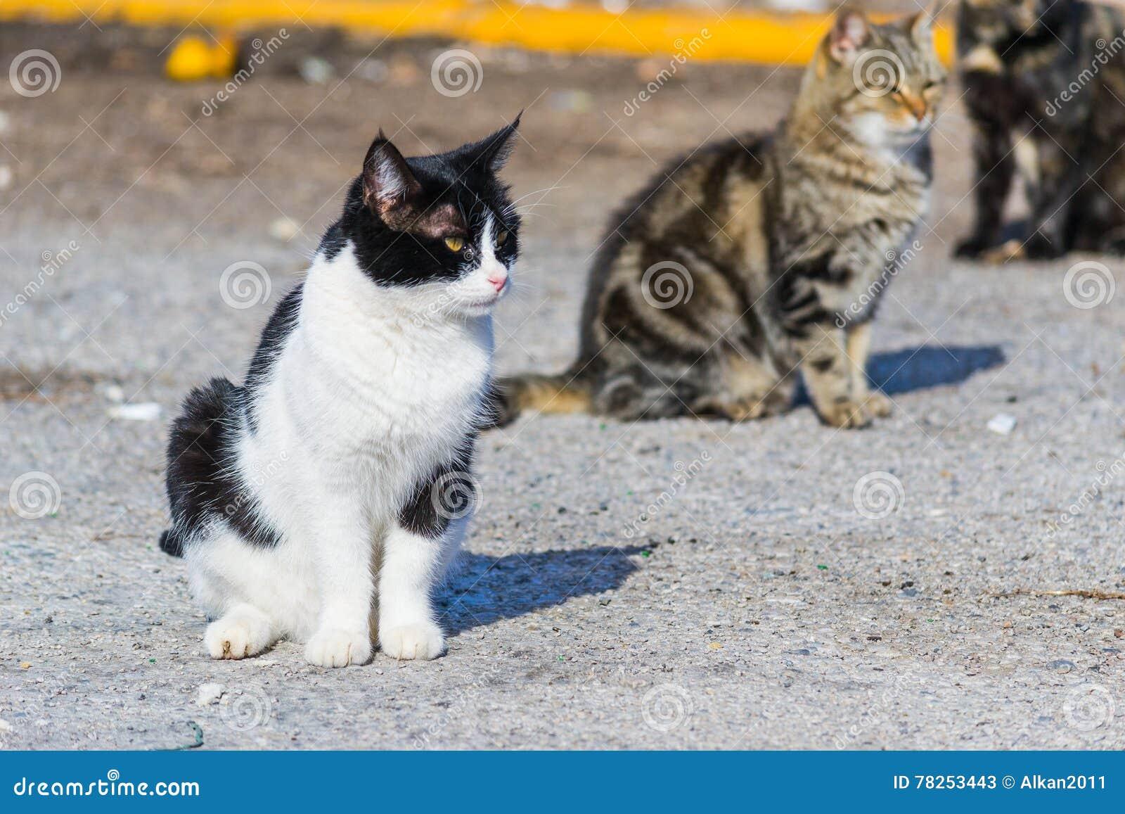 Γάτες στην οδό