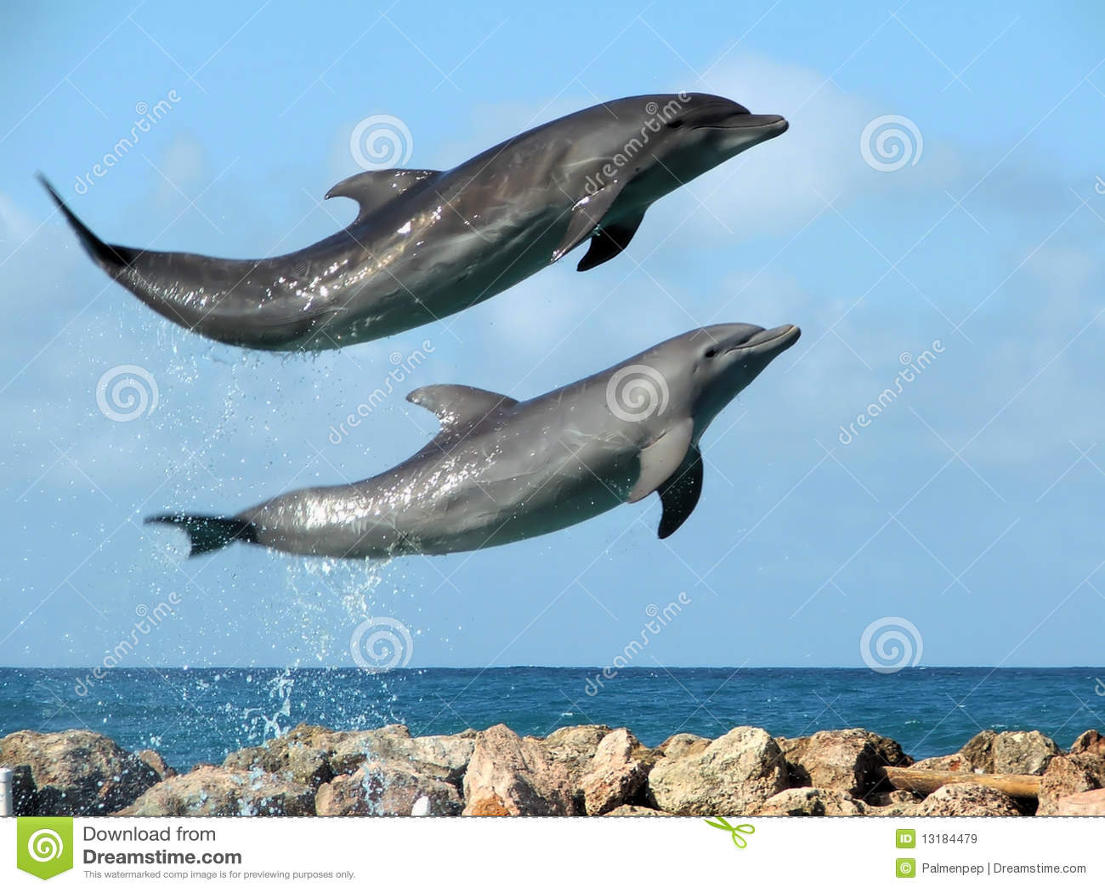 γέλιο δελφινιών