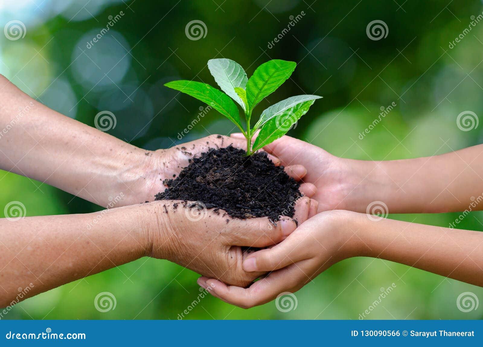 Γήινη ημέρα περιβάλλοντος δέντρων χεριών μωρών ενηλίκων στα χέρια των δέντρων που αυξάνεται τα σπορόφυτα Bokeh πράσινη εκμετάλλευ