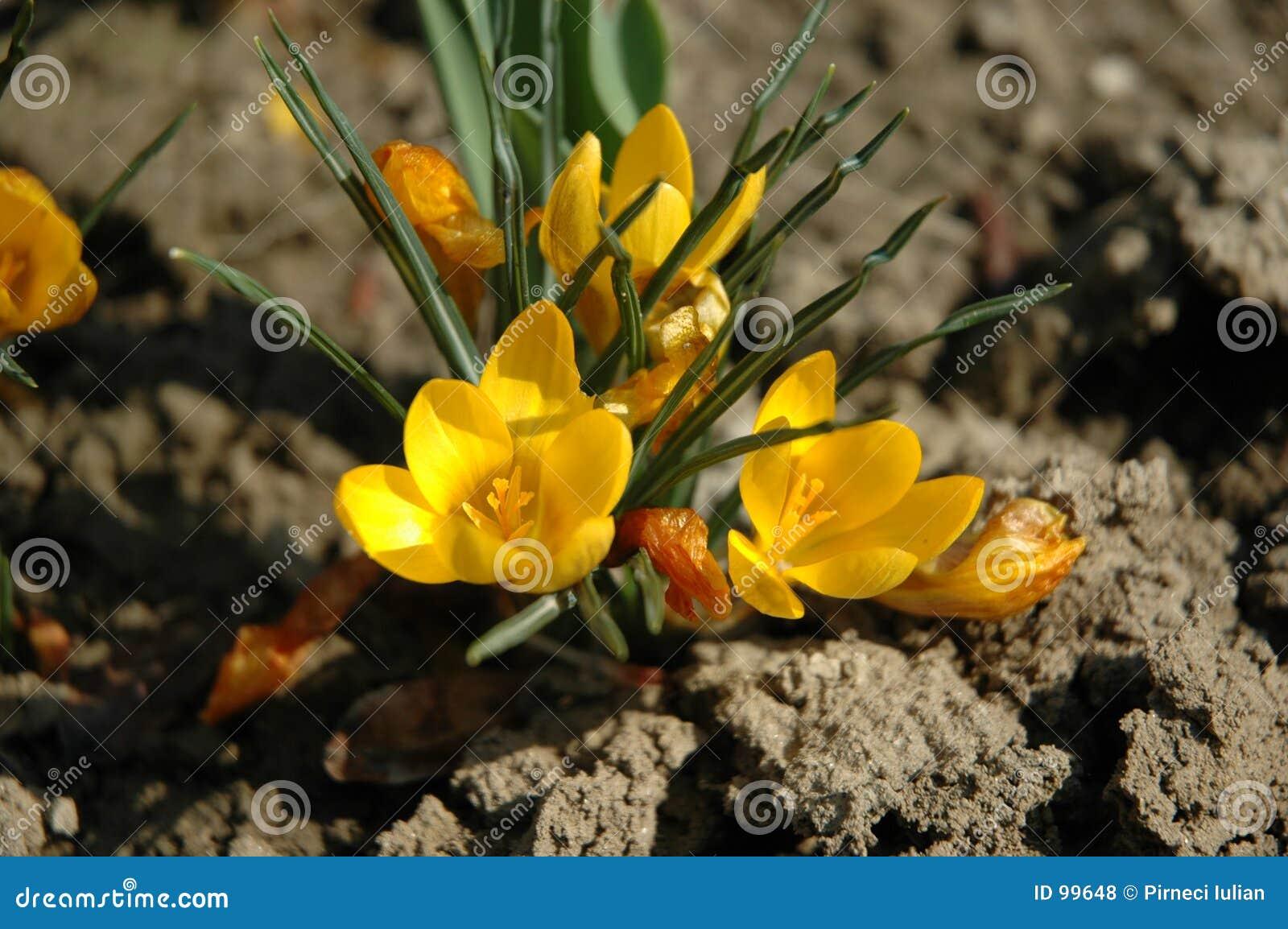 γήινο λουλούδι