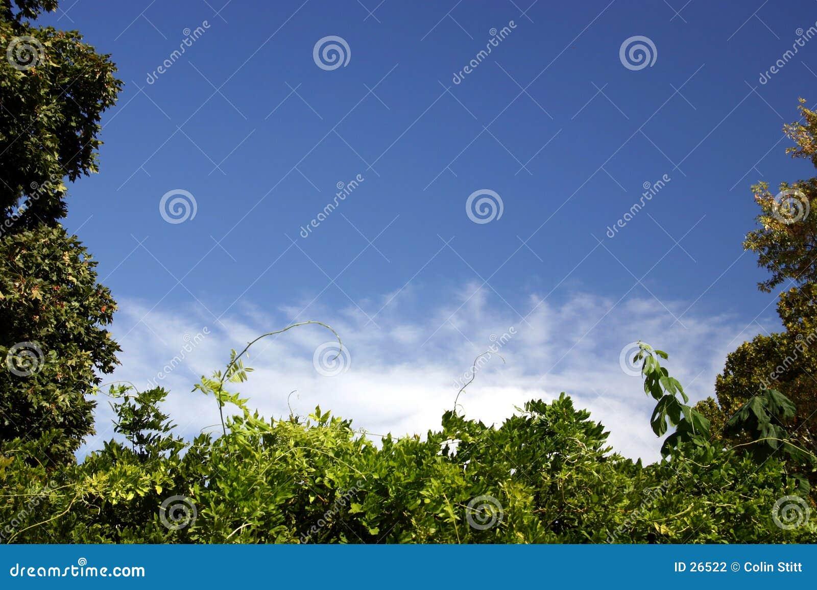 γαλαζοπράσινο λευκό