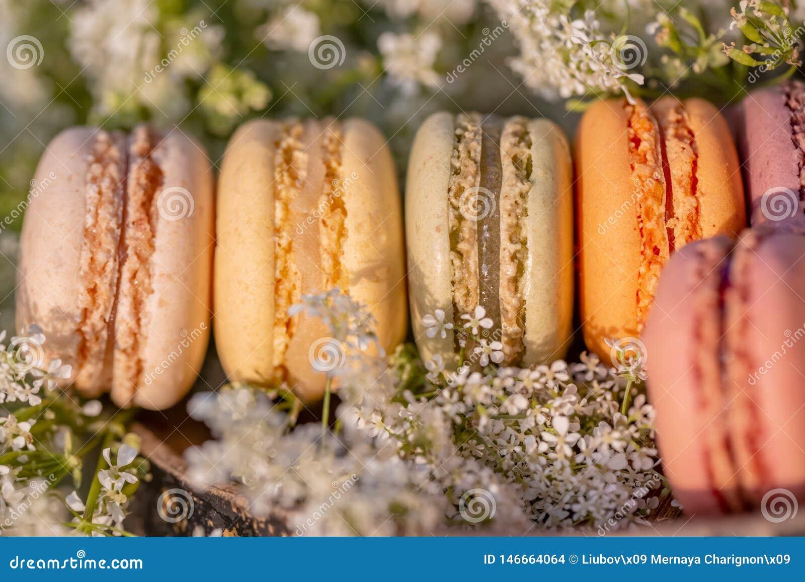 Γαλλικές ζύμες Γλυκά επιδορπίων macarons και άσπρα λουλούδια λιβαδιών το θερινό βράδυ στον οπωρώνα