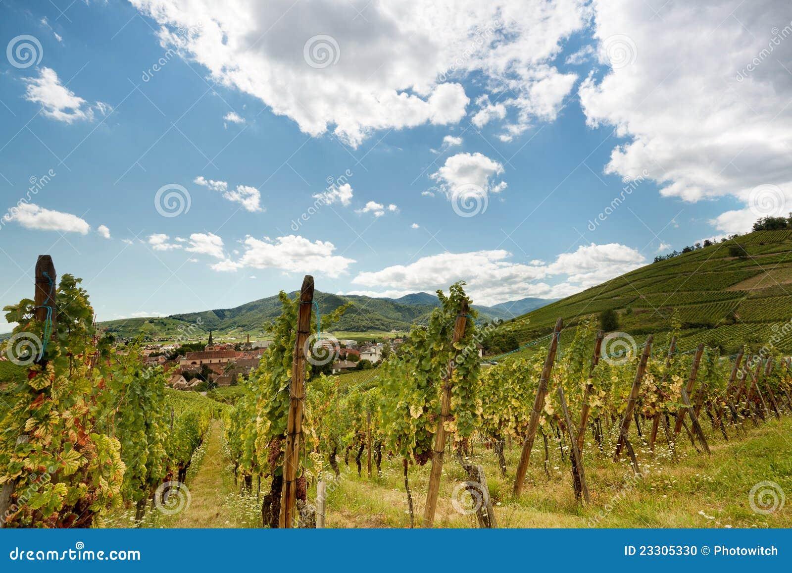 γαλλικό του χωριού κρασί της Αλσατίας