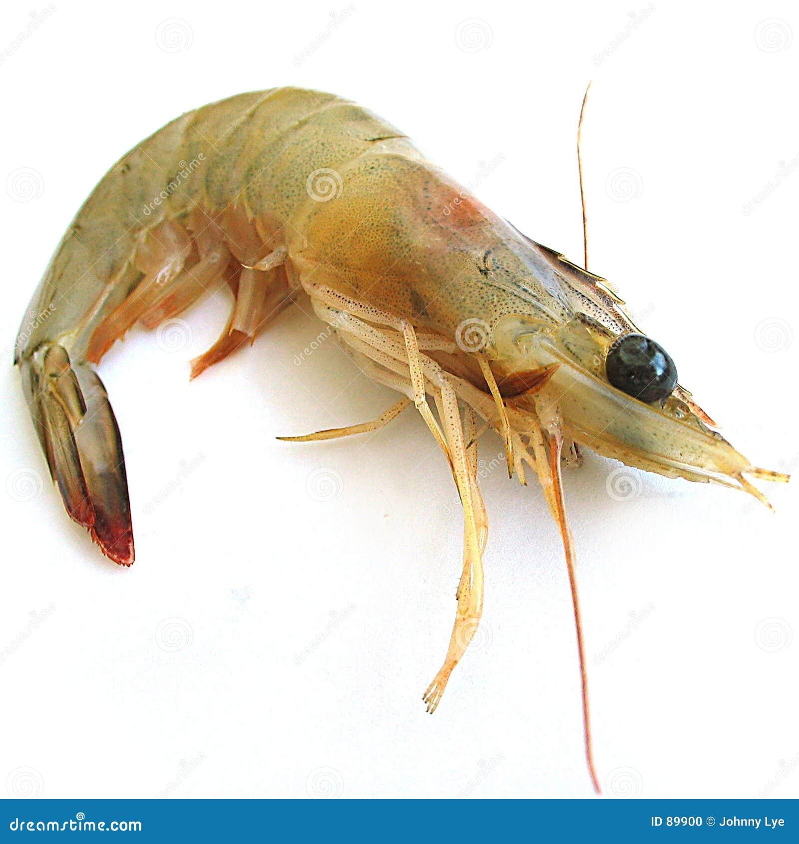 γαρίδα