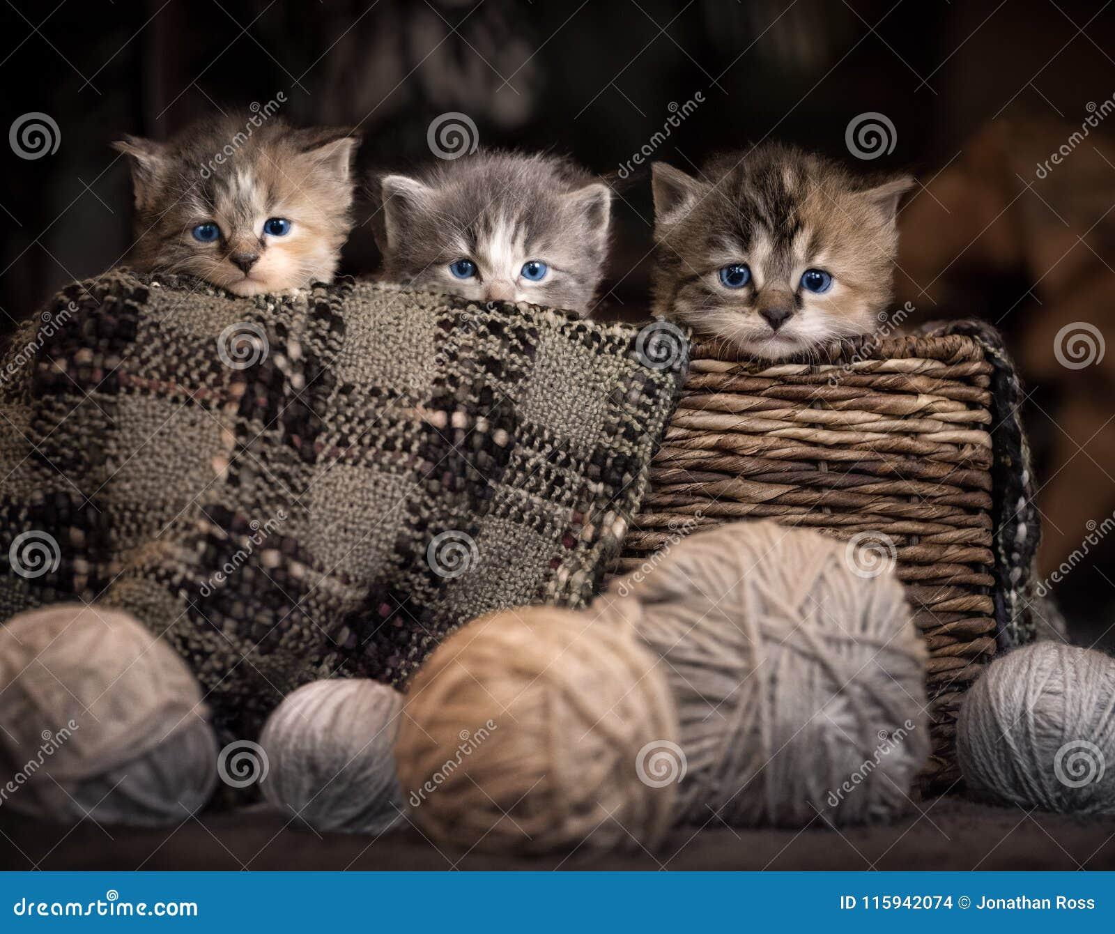 γατάκια τρία καλαθιών