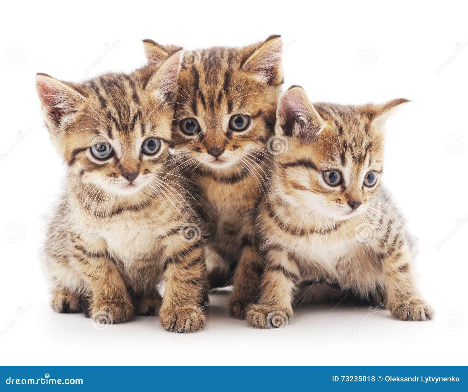 γατάκια τρία