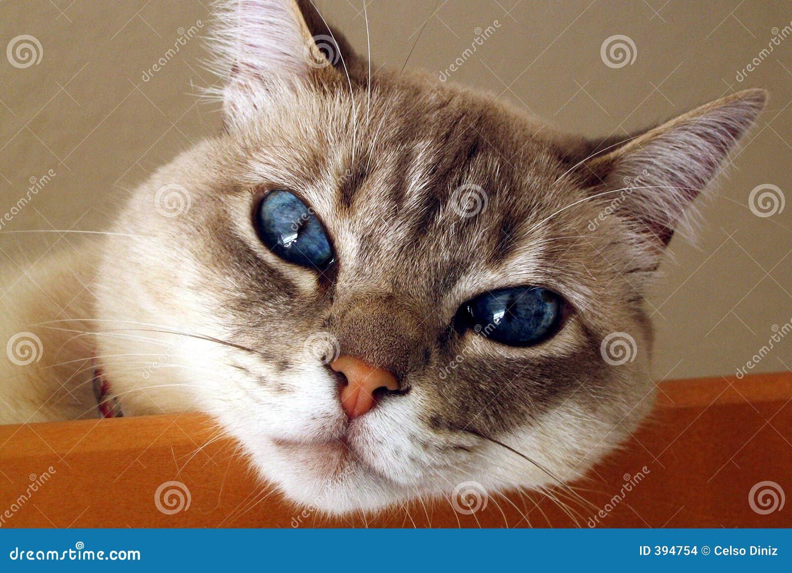 γατάκι γατών