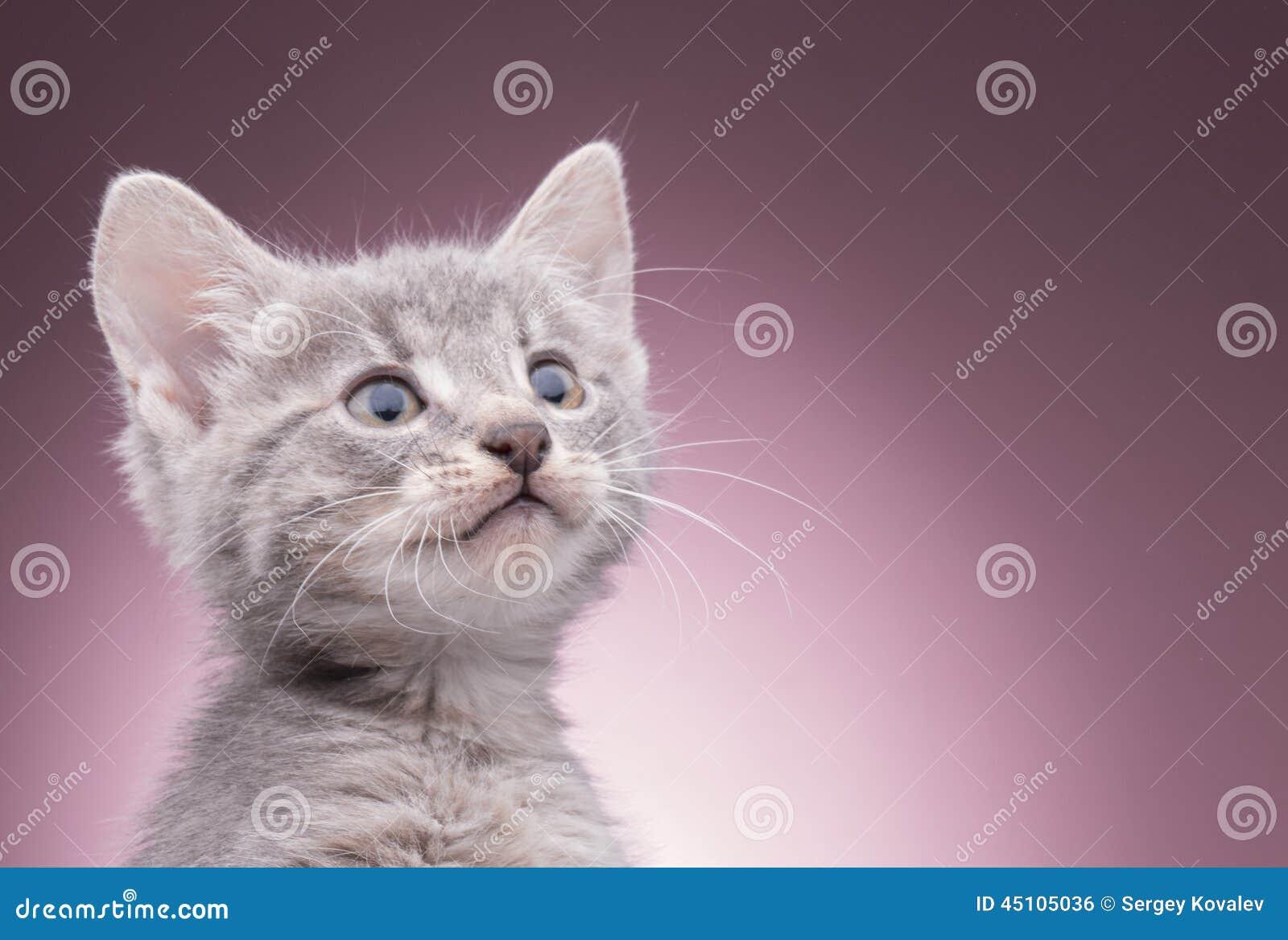 γατάκι καλαθιών λίγα