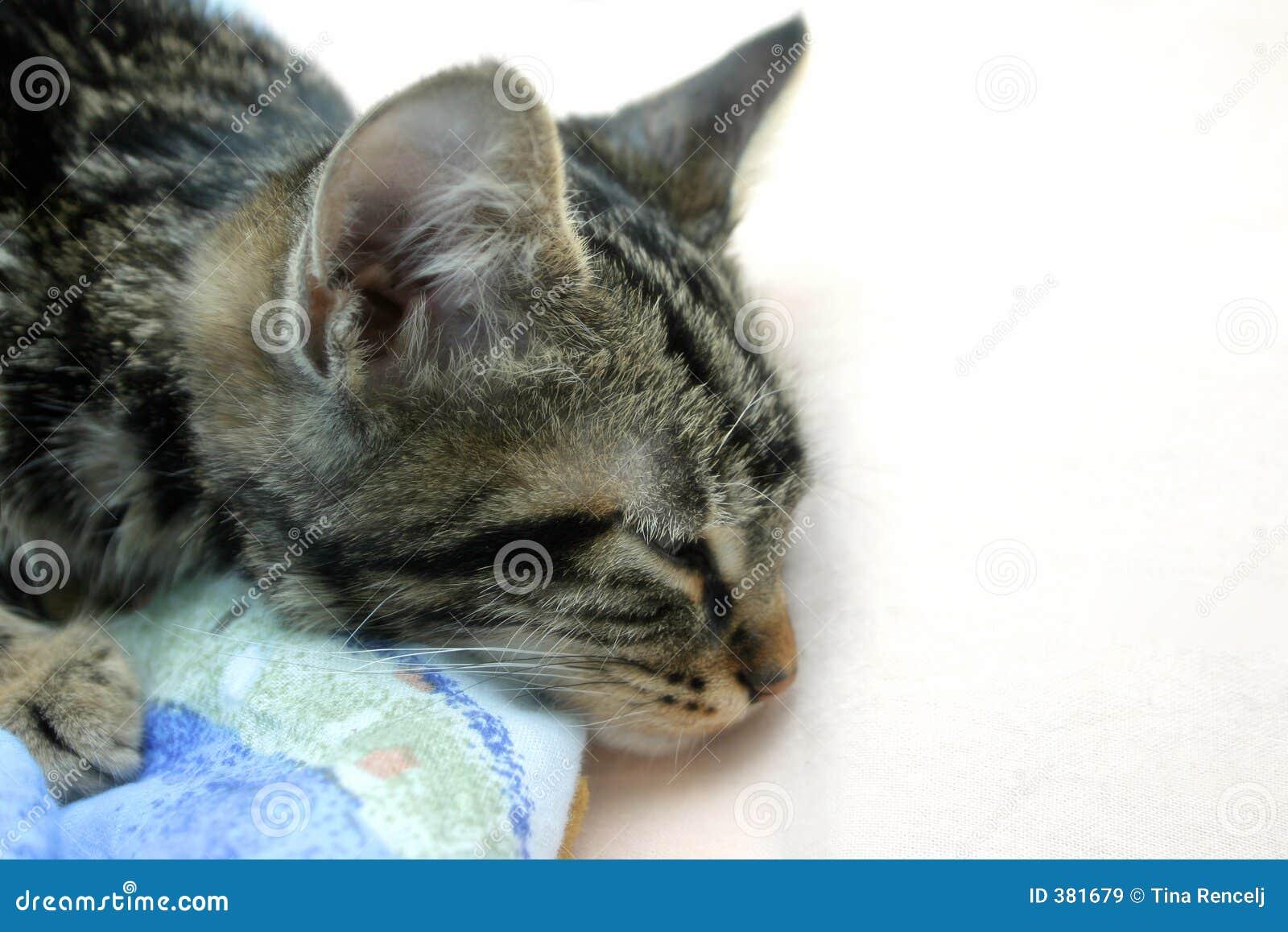 γατάκι νυσταλέο