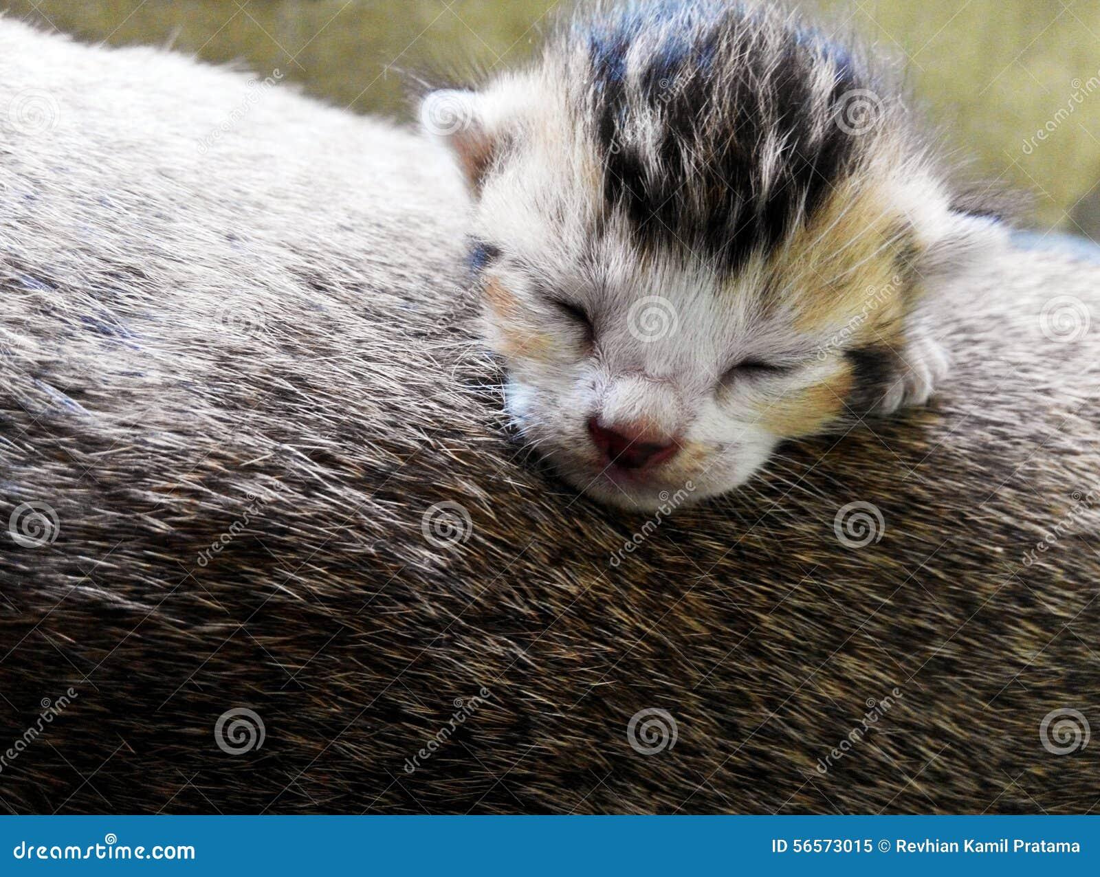 Download γατάκι νυσταλέο στοκ εικόνα. εικόνα από κατόπιν, παιγμένος - 56573015
