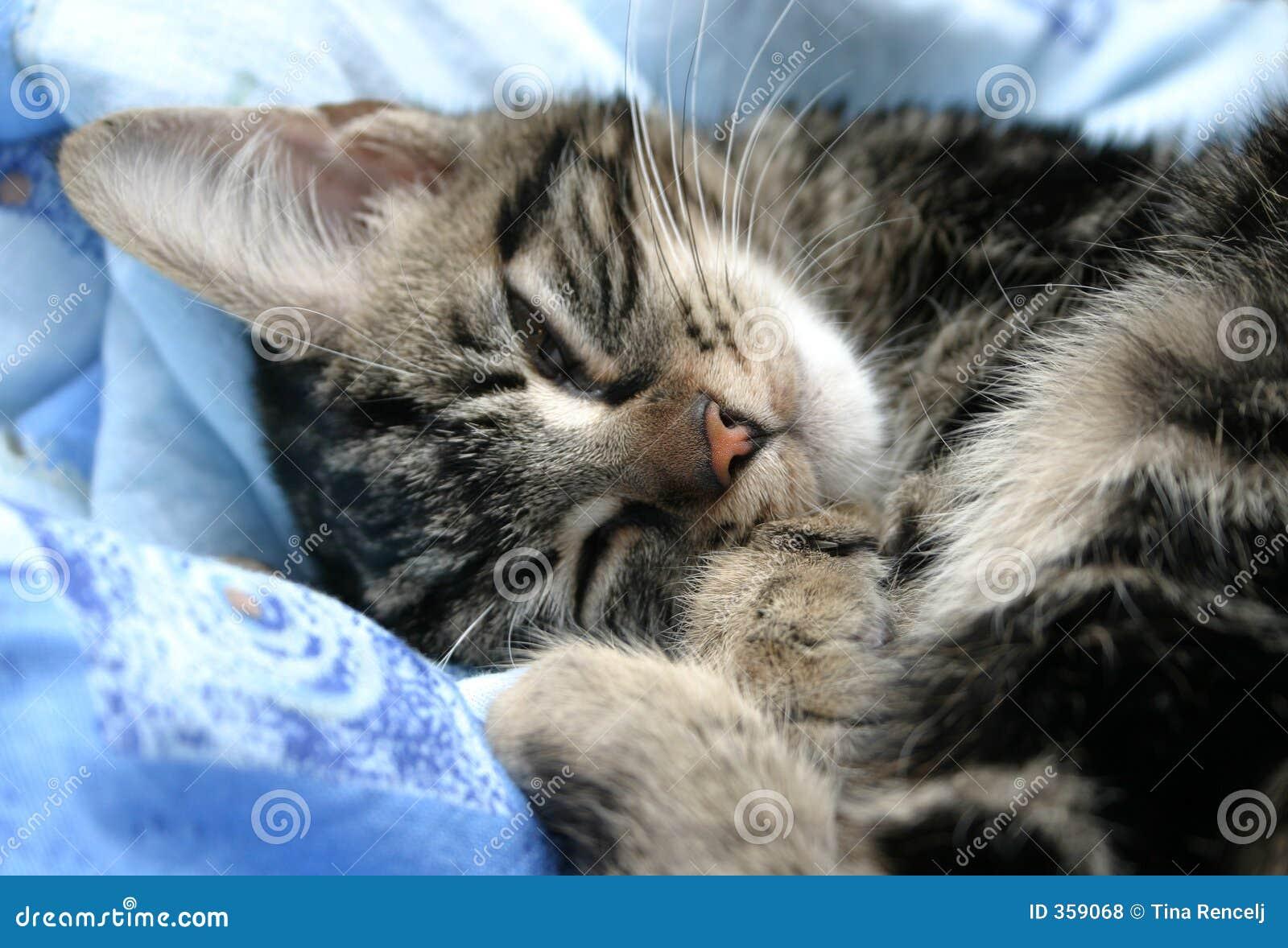 γατάκι που κουράζεται