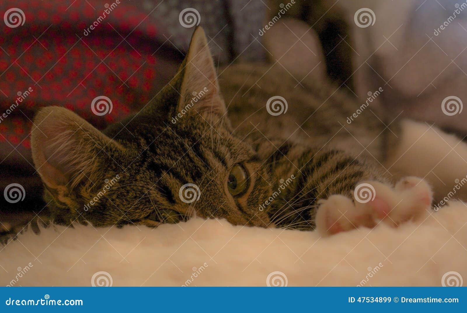 Γατάκι που φτάνει