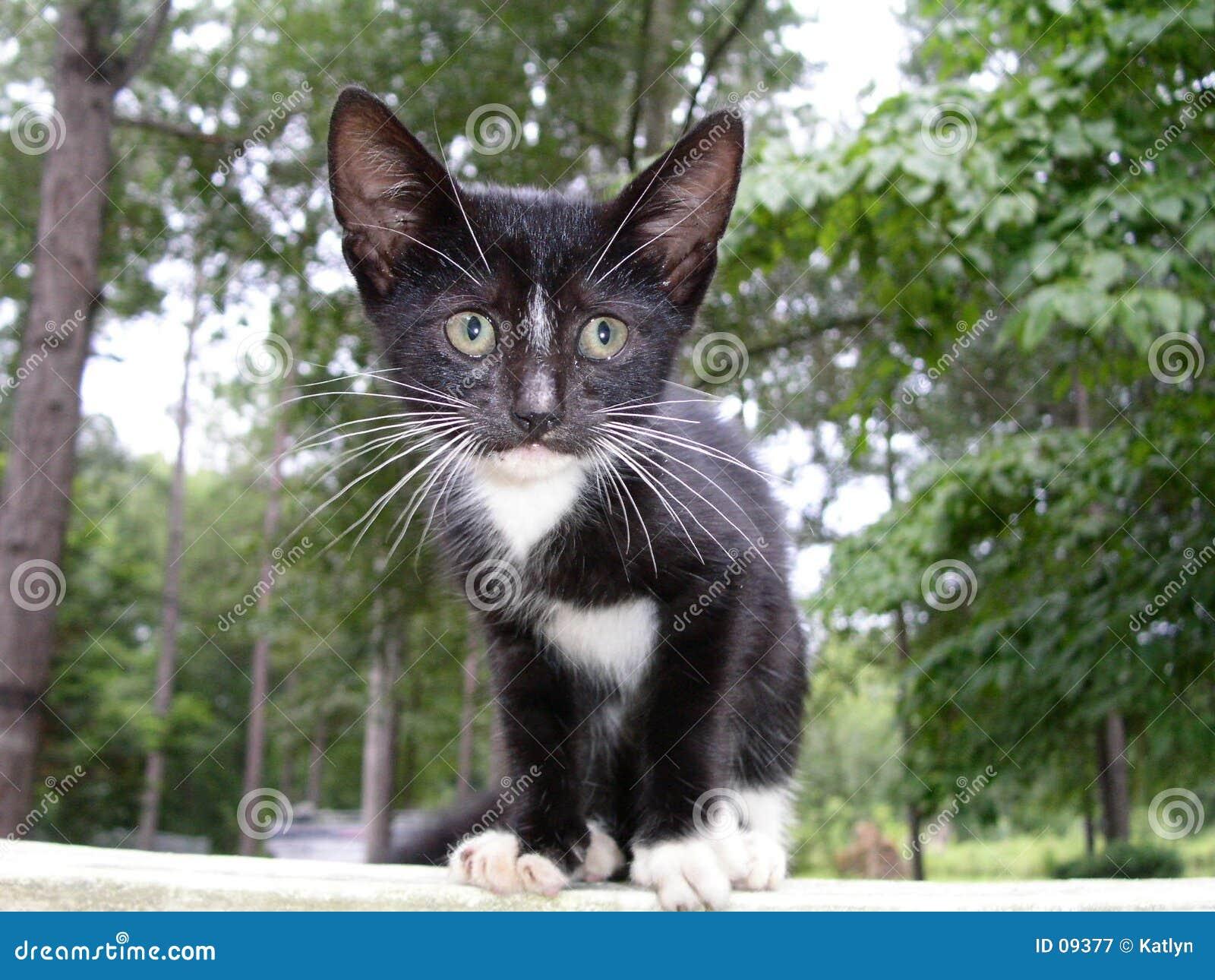 γατάκι που χάνεται
