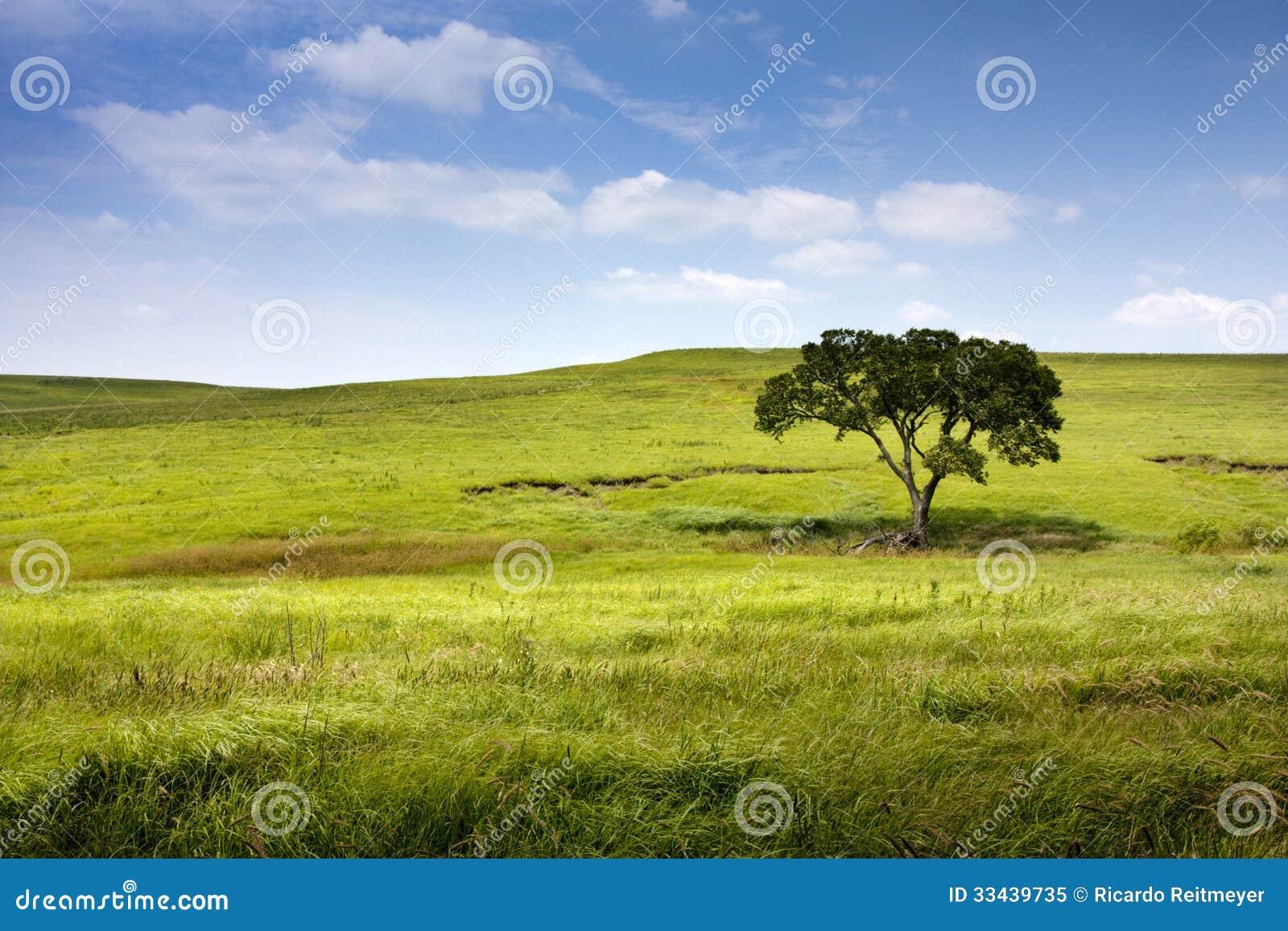 Γαλήνιο τοπίο φύσης της midwest Κάνσας Tallgrass κονσέρβας λιβαδιών