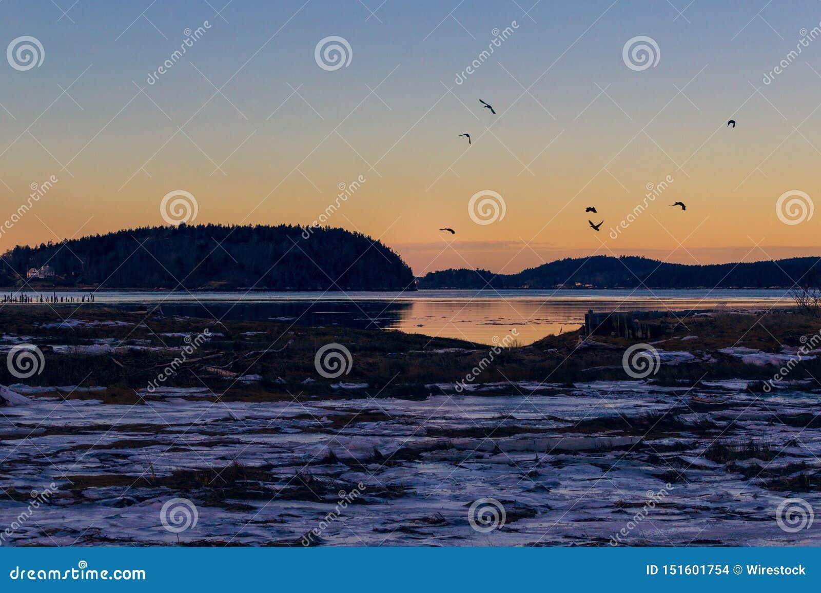 Γερανοί που πετούν πέρα από τη λίμνη στο σούρουπο στο wintertime