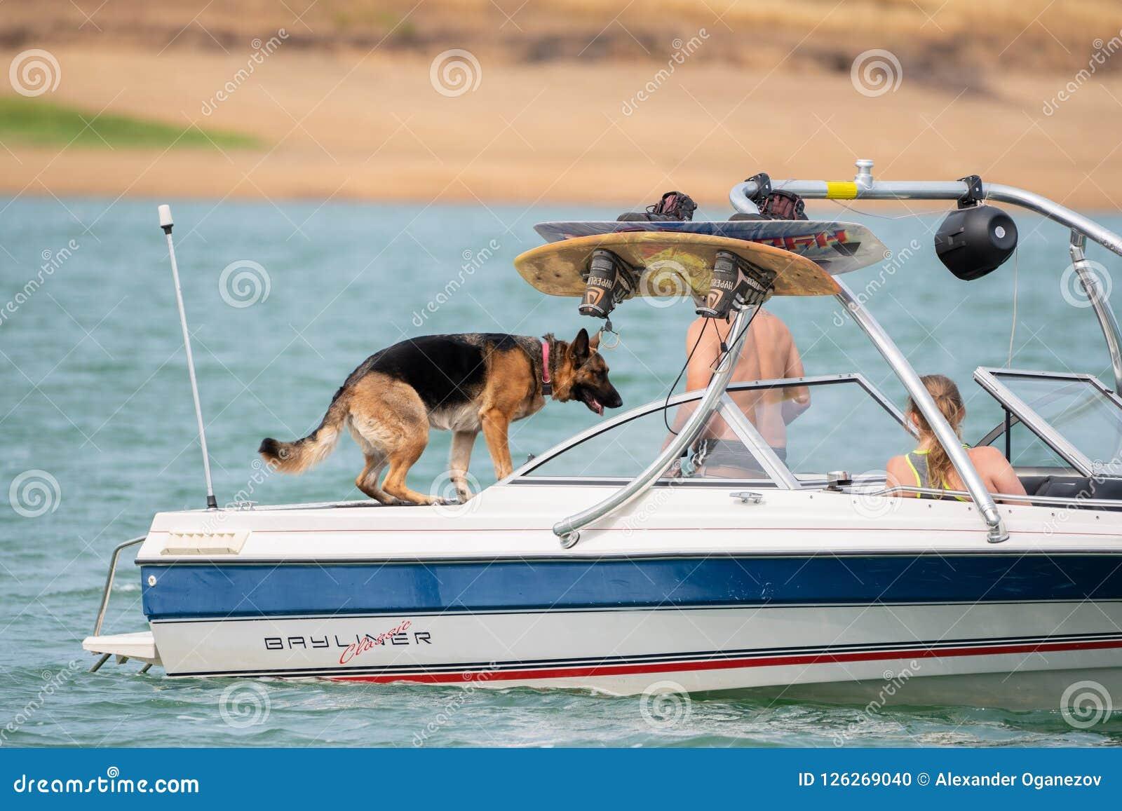 Γερμανικό σκυλί ποιμένων στη βάρκα