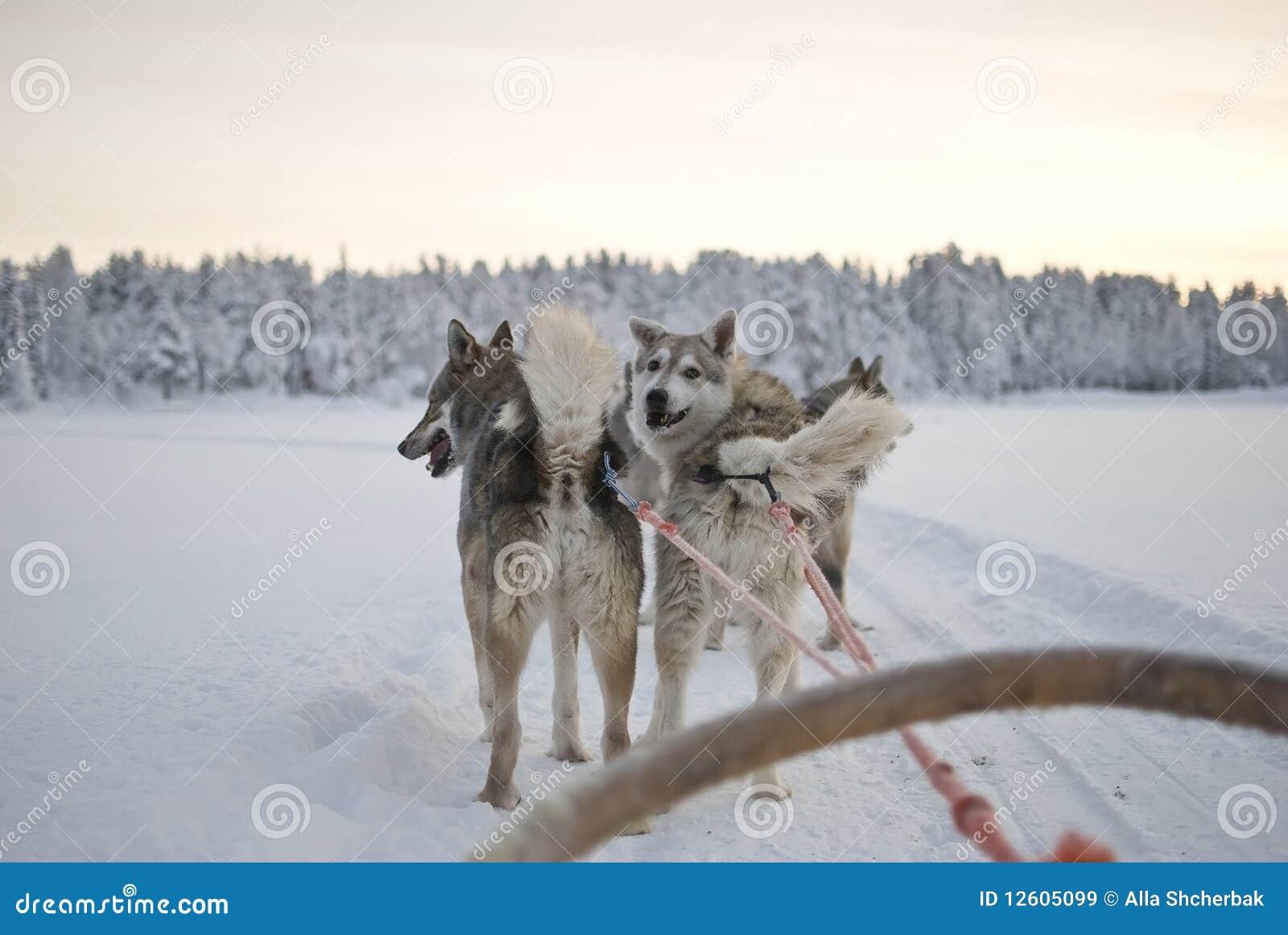 γεροδεμένο έλκηθρο σκυ
