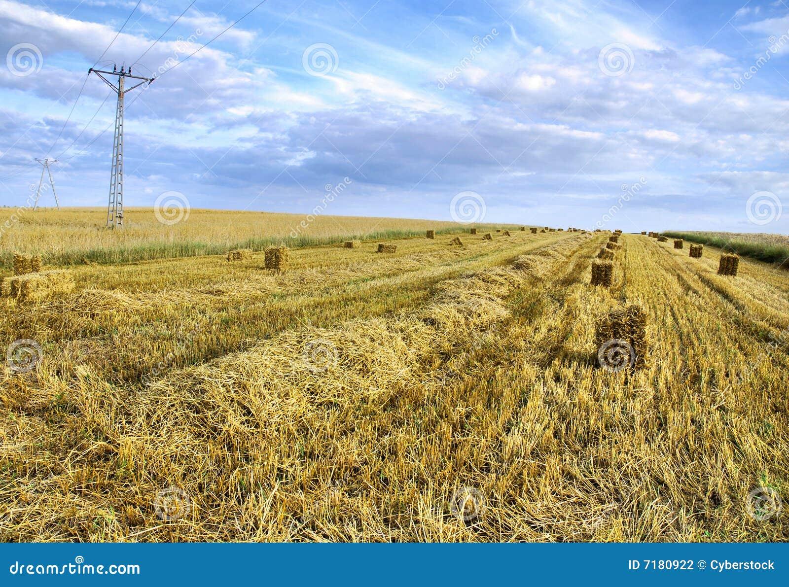 γεωργικό τοπίο