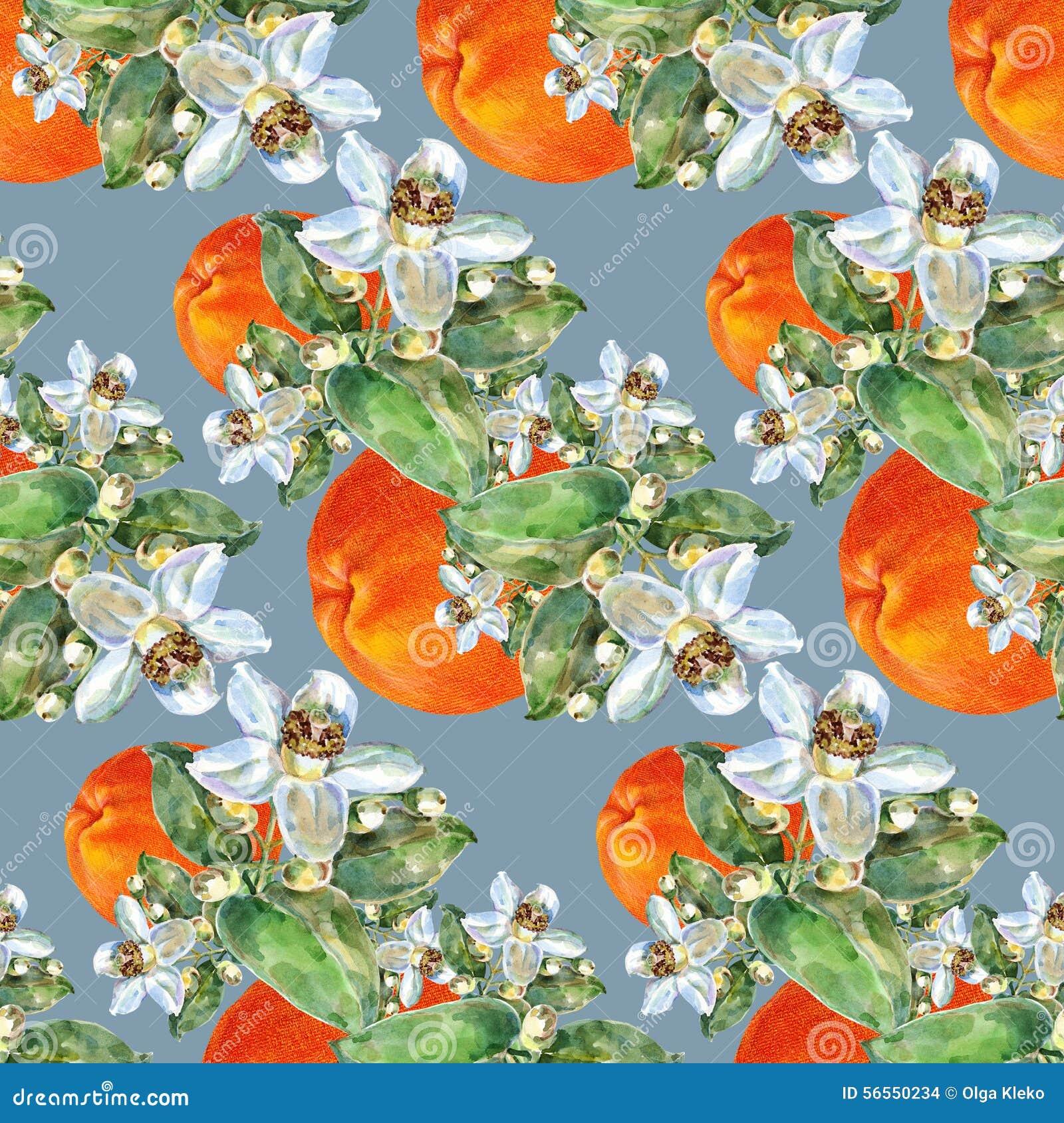 Download Γκρέιπφρουτ και λουλούδι, Watercolor, σχέδιο άνευ ραφής Απεικόνιση αποθεμάτων - εικονογραφία από δικτυωτός, χαιρετισμός: 56550234