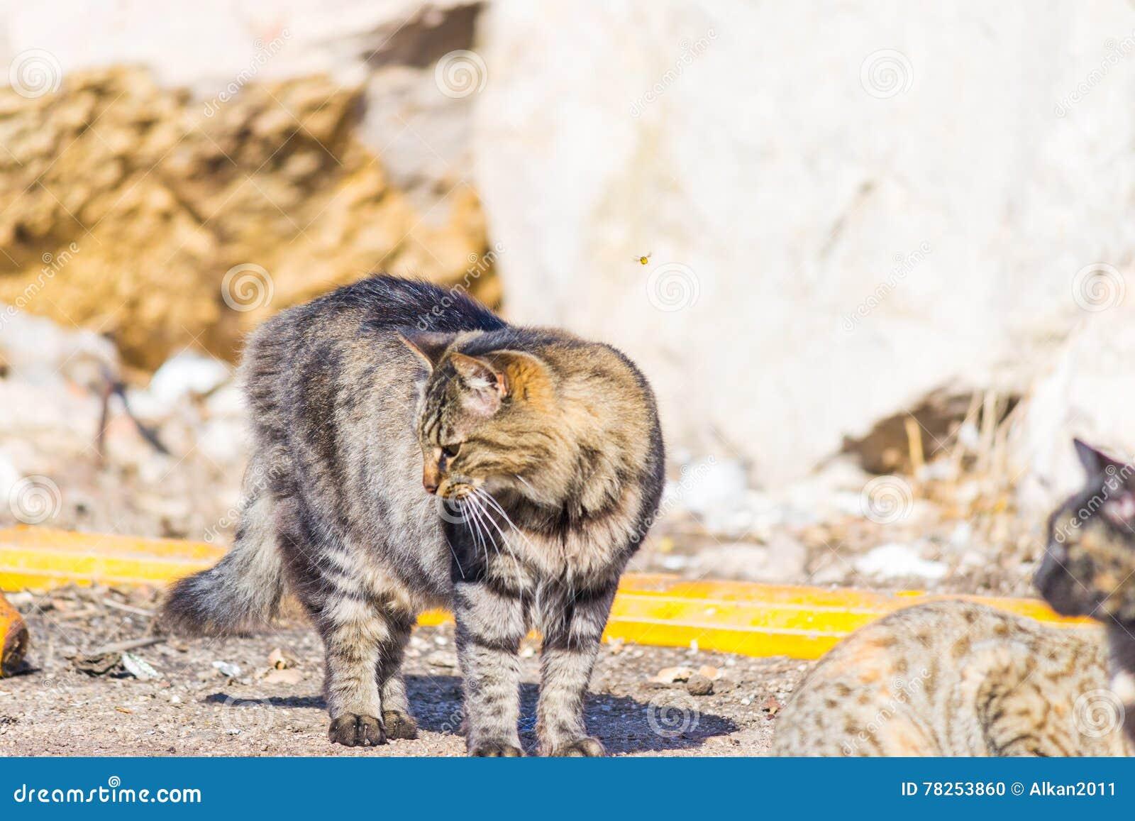 Γκρίζα γάτα στην οδό
