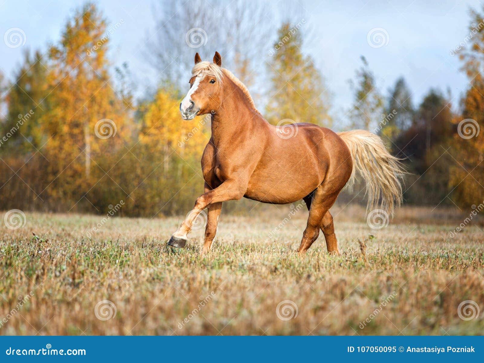 Γκρίζο άλογο portait στη δασική φύση φθινοπώρου, κοίταγμα