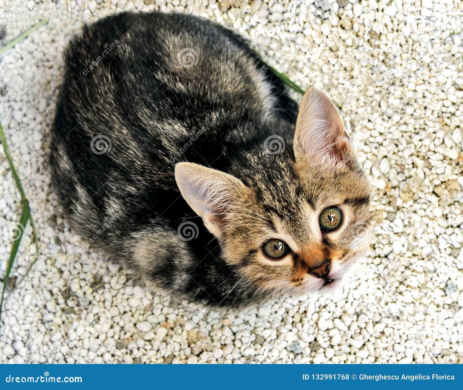 Γκρίζο ριγωτό γατάκι που ανατρέχει στο αμμοχάλικο