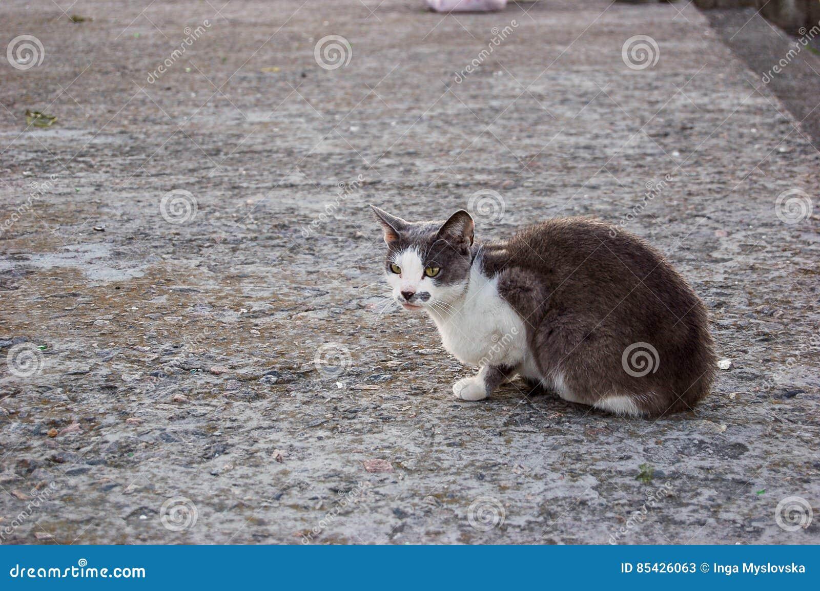 Γκριζόλευκο πάτωμα συνεδρίασης γατών